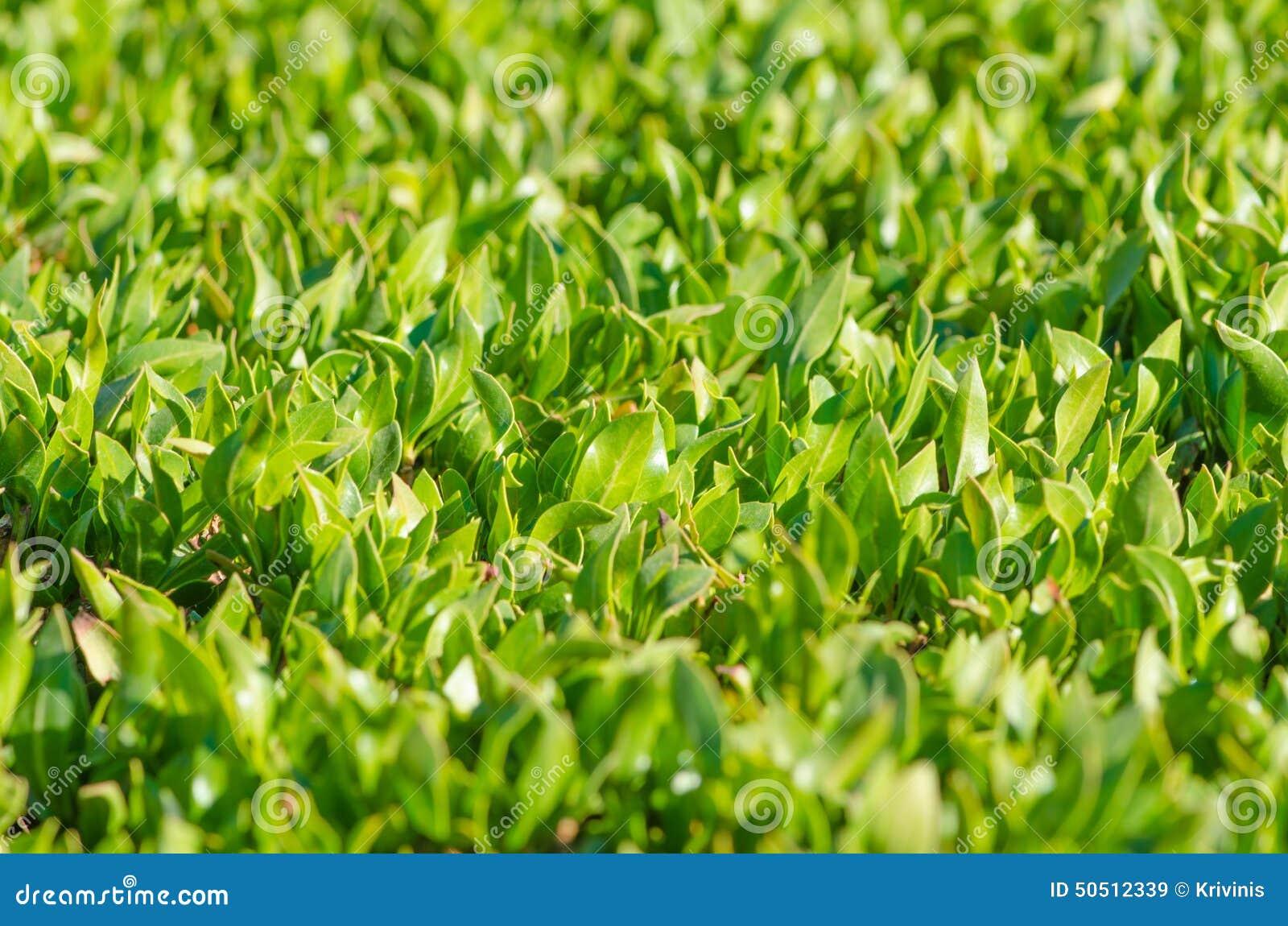 Grüner Zaun stockbild Bild von wand boden blume beschaffenheit