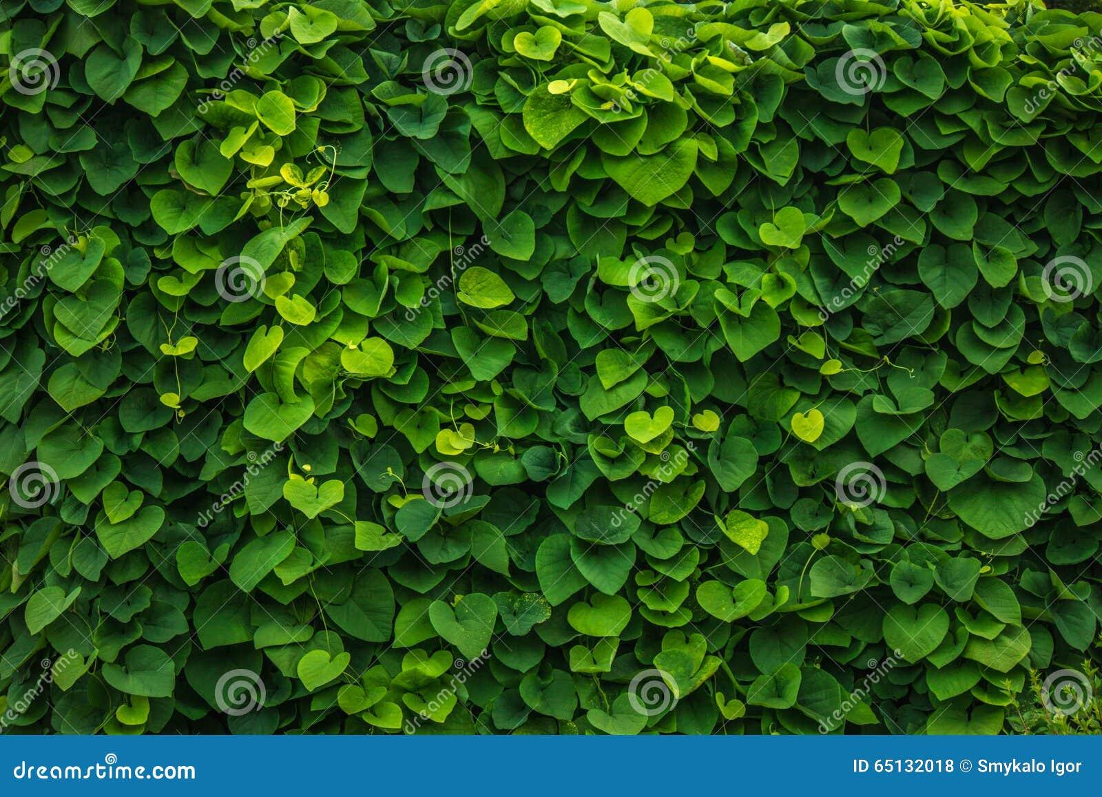 Grüner Zaun Stockfoto Bild