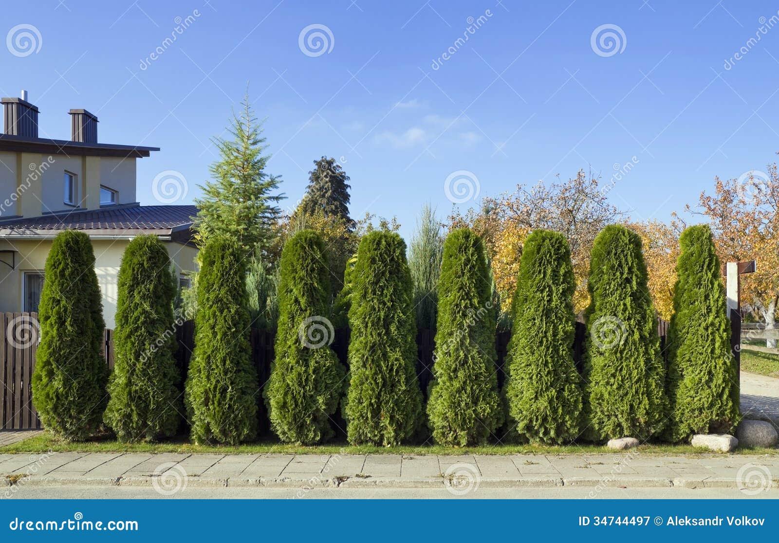 Grüner Zaun Von Bäumen Lizenzfreie Stockfotografie Bild