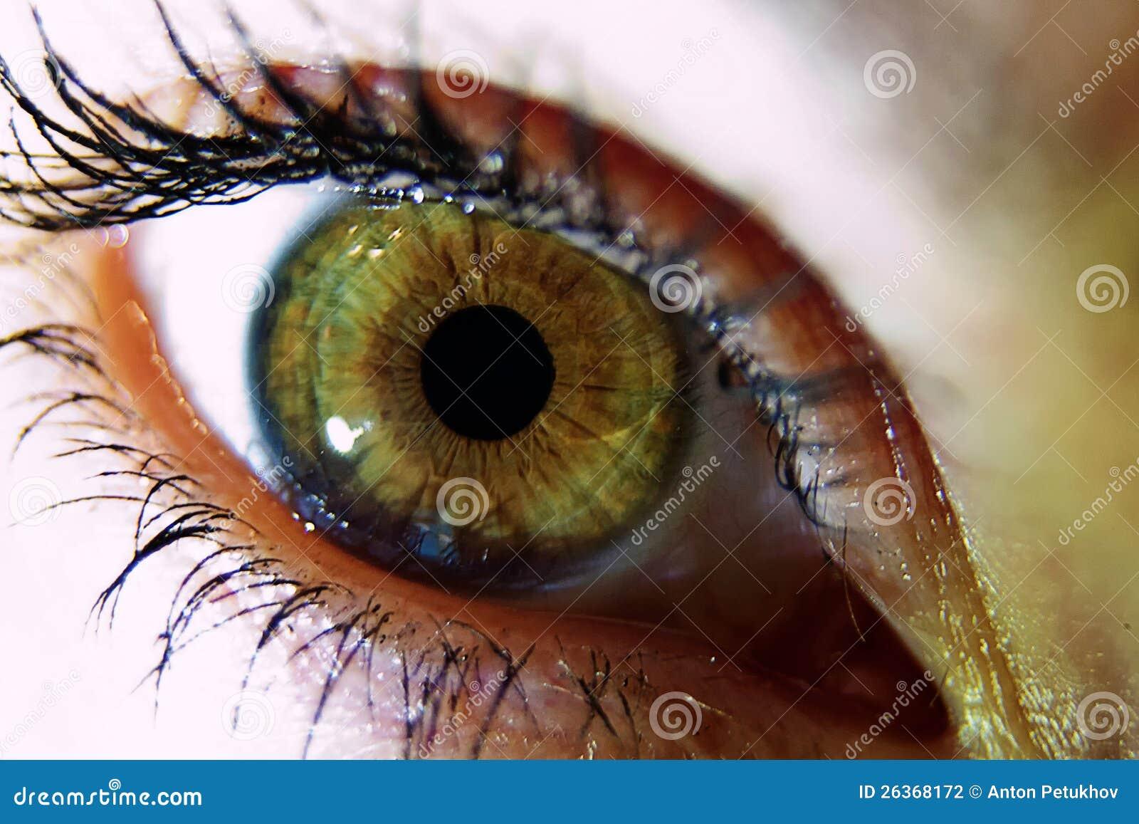 Grünes Auge der Frau
