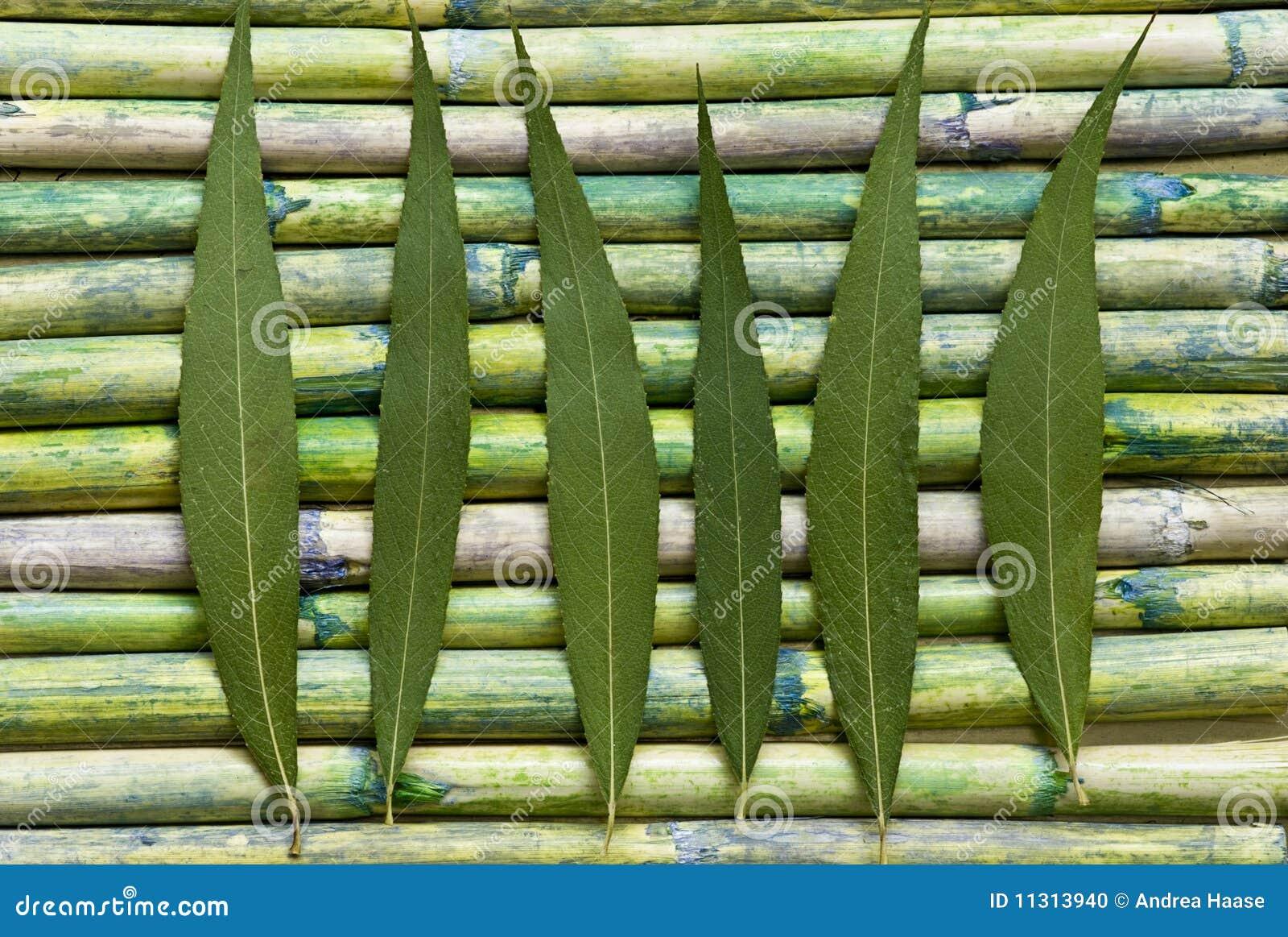 Grünes Blatt auf Bambus
