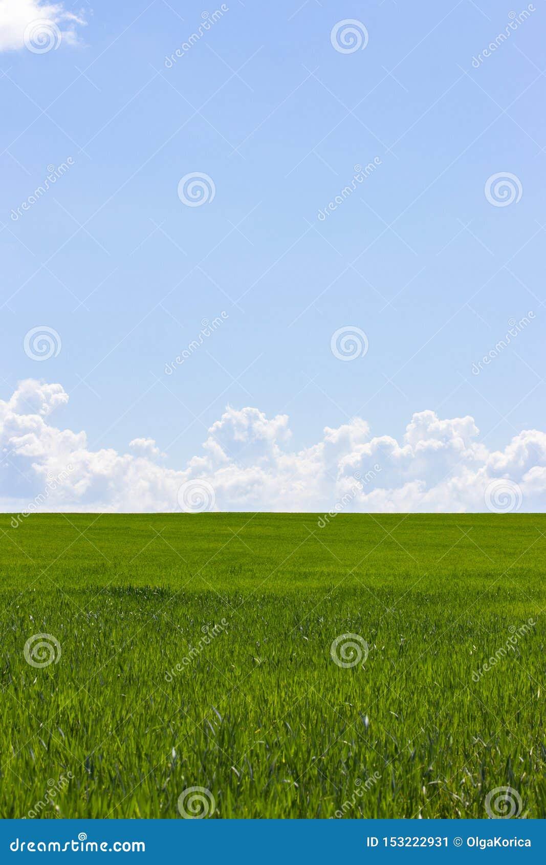 Grünes Feld und blauer Himmel mit weißen Wolken, die Hintergrundtapeten-Landschaftsvertikale Ländliche Landschaft mit Weizensprös
