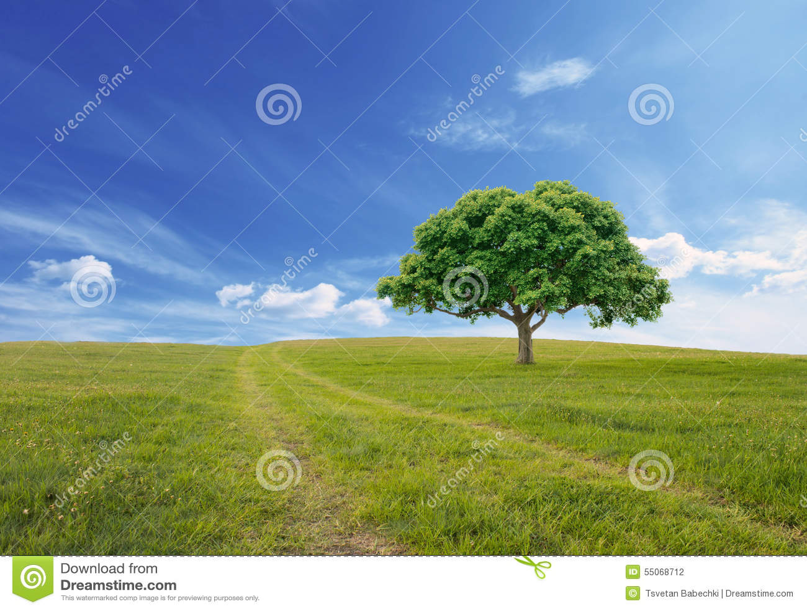 Grünes Feld und schöne Sonnenuntergangsommerlandschaft
