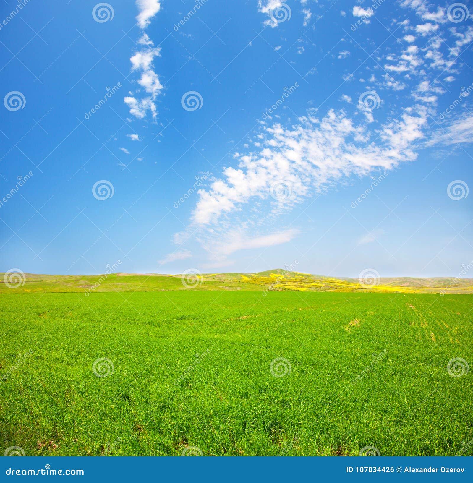 Grünes Feld unter blauem bewölktem Himmel