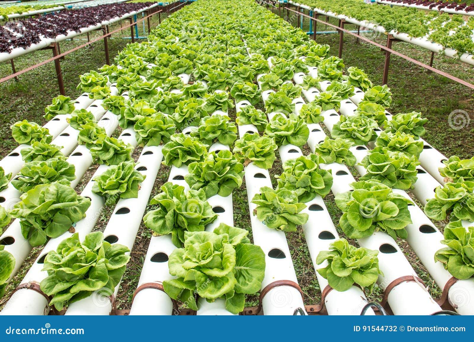 Grünes Gemüse Der Hydroponik Im Kleinen Garten Stockfoto