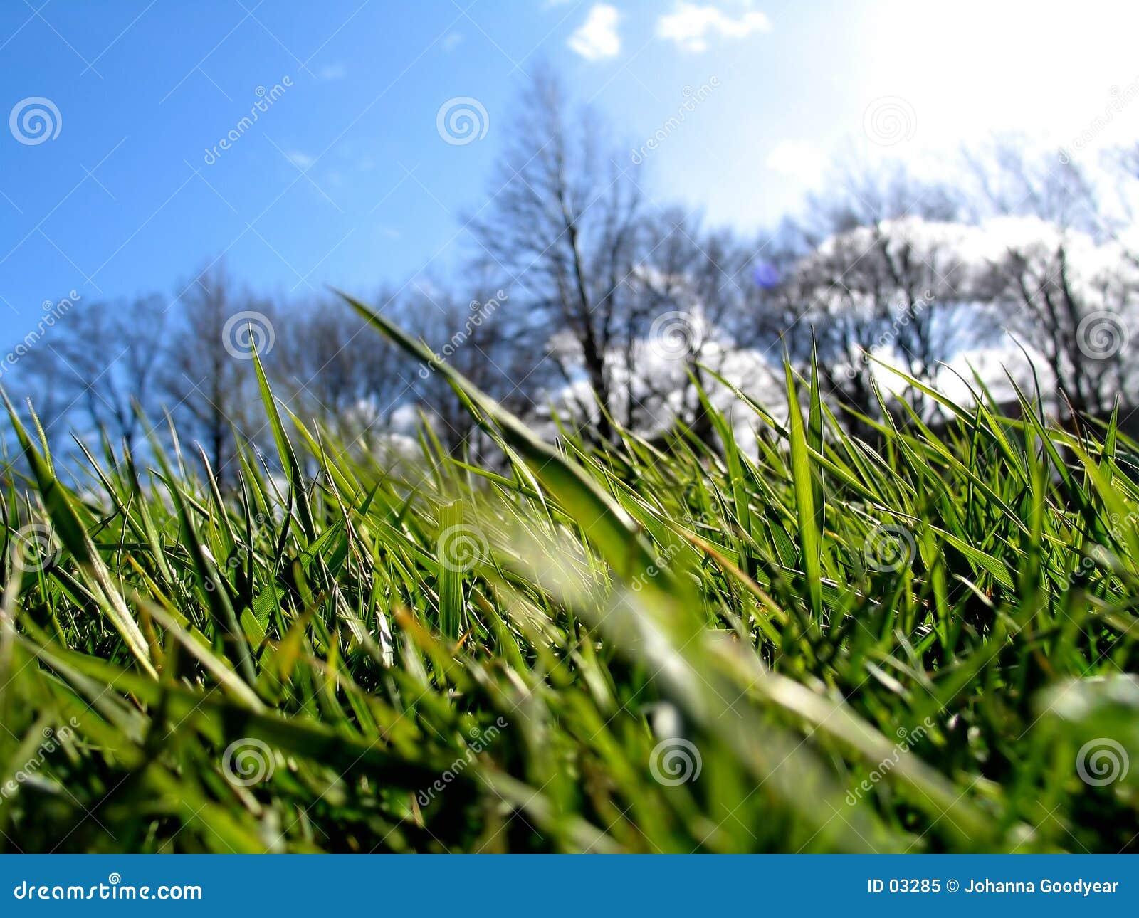 Grünes Gras II