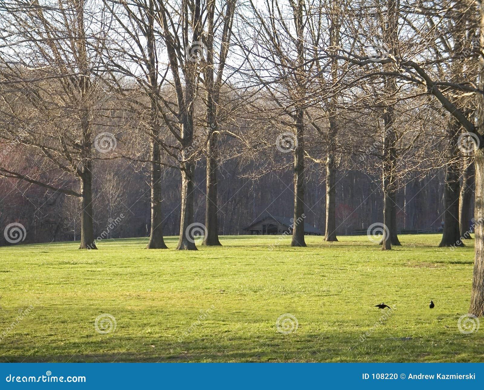 Grünes Gras und hohe Bäume