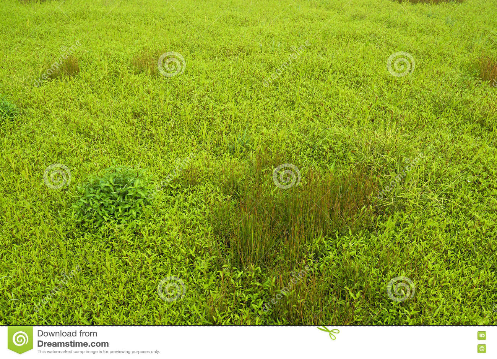Grünes Gras und wild wachsende Pflanzen auf dem Gebiet
