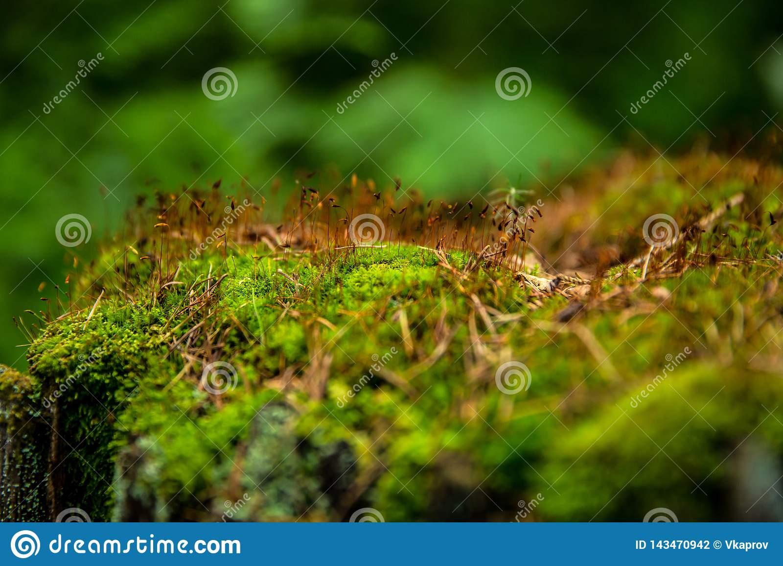 Grünes Moos und gelbes Gras auf einem Baum im Wald