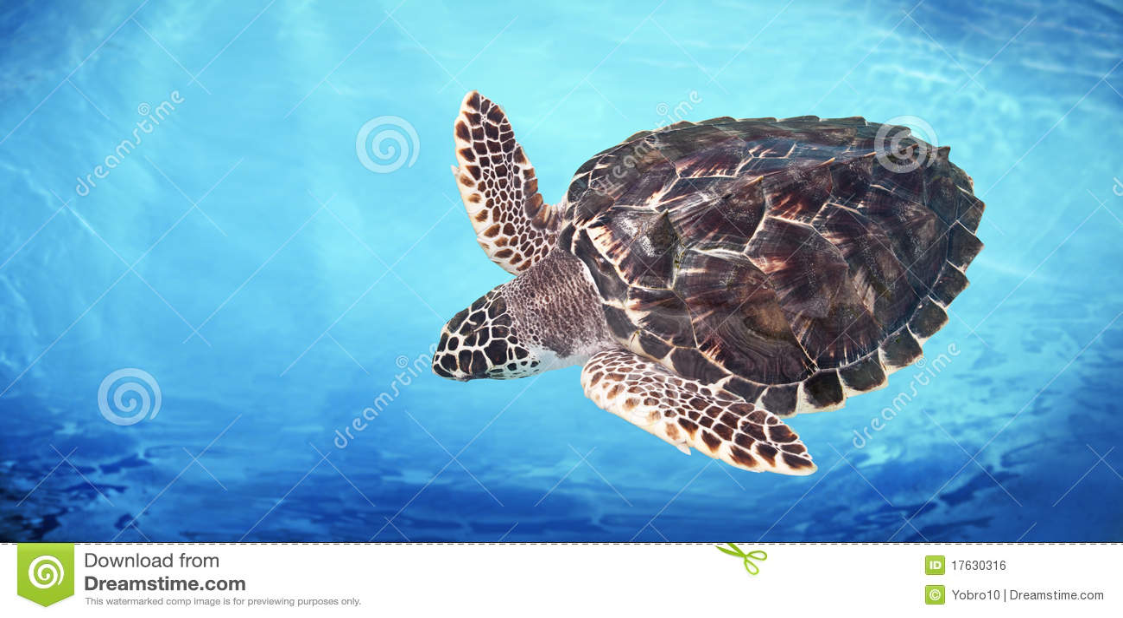 grünes seeschildkröte stockfoto bild von schildkröte