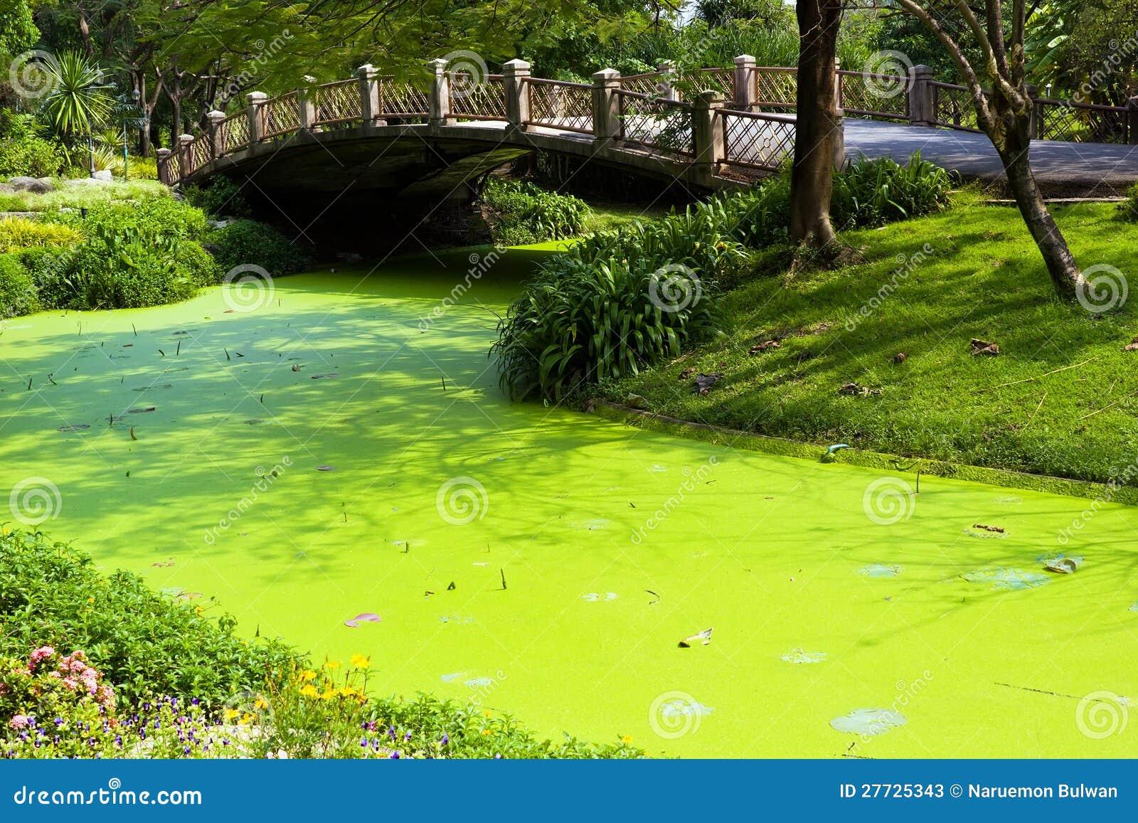 Grünes Wasser im Park mit Brücke