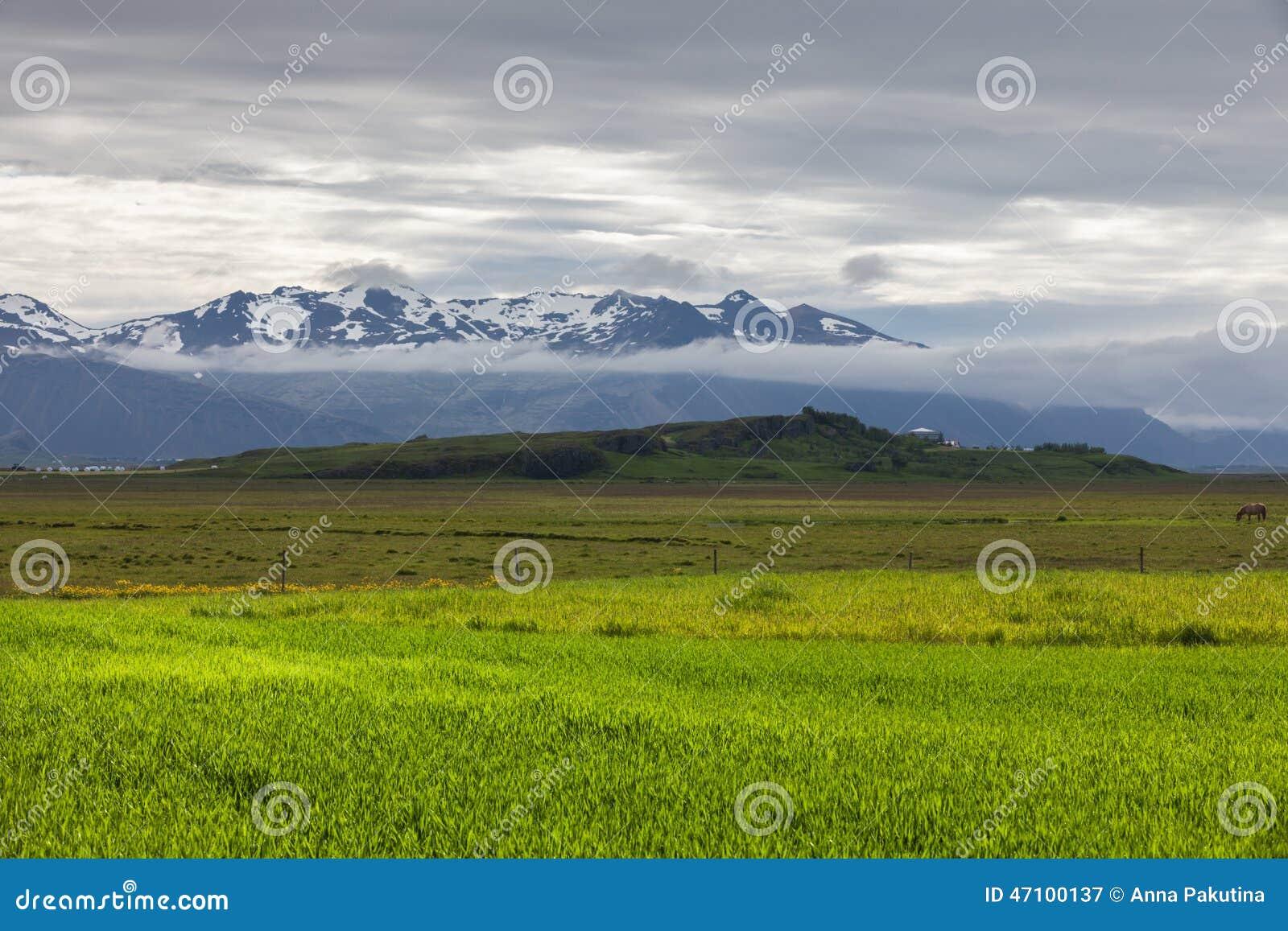 Grünfelder im Tal in Island