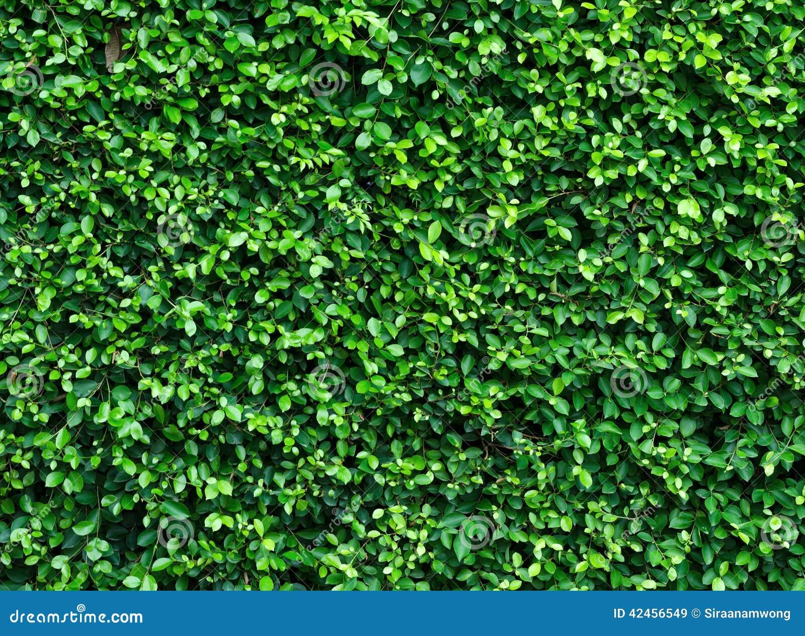 Grünpflanze auf der Wand
