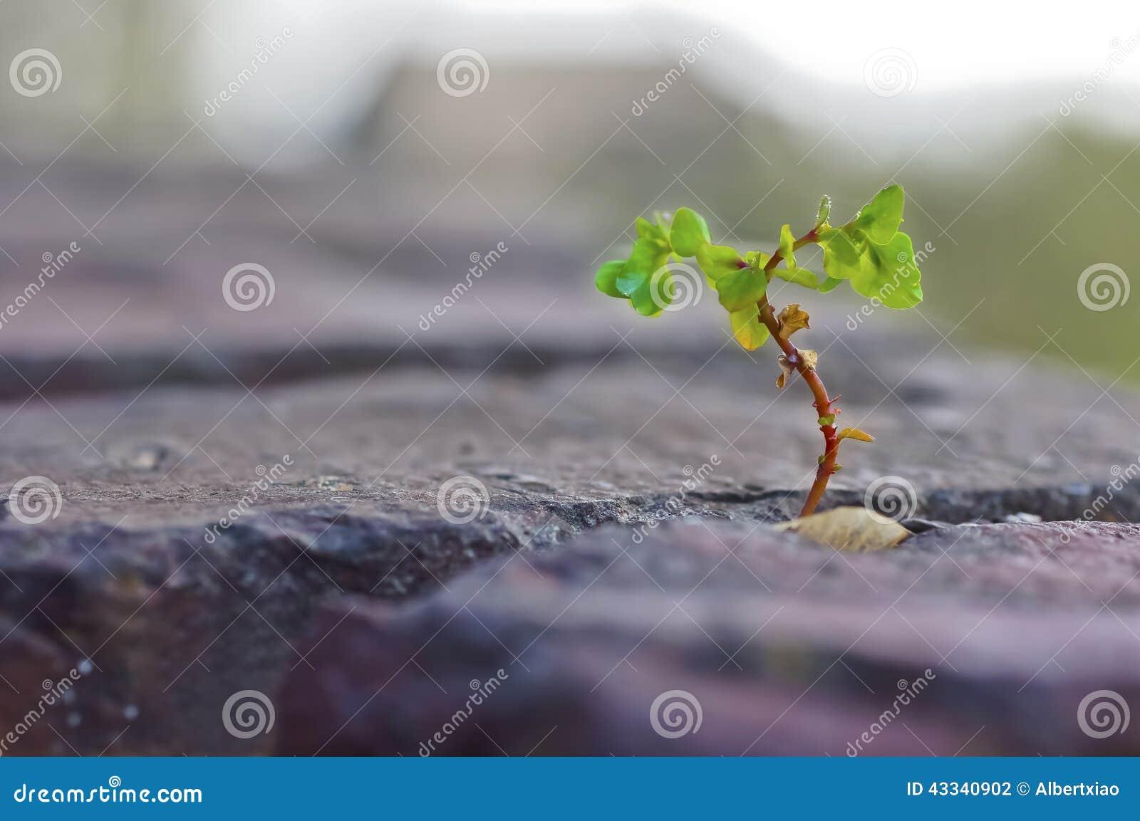Grünpflanze, die durch bricht