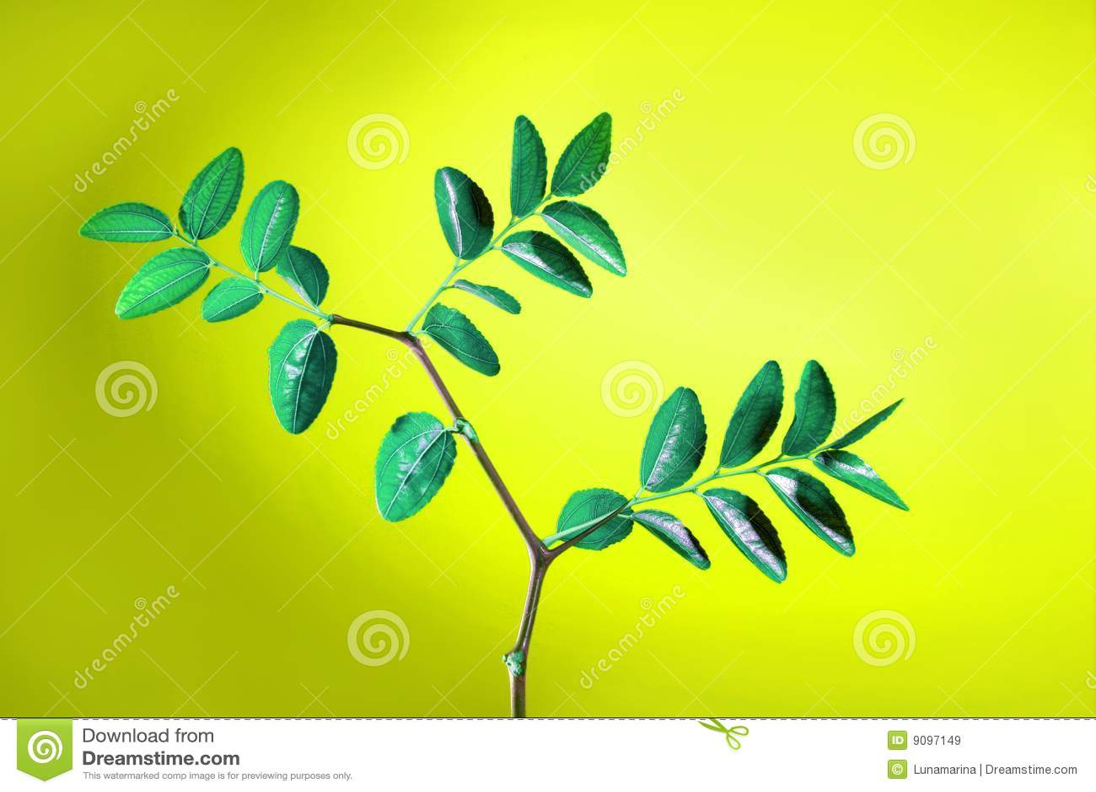 Grünpflanze mit Blattstudioschuß