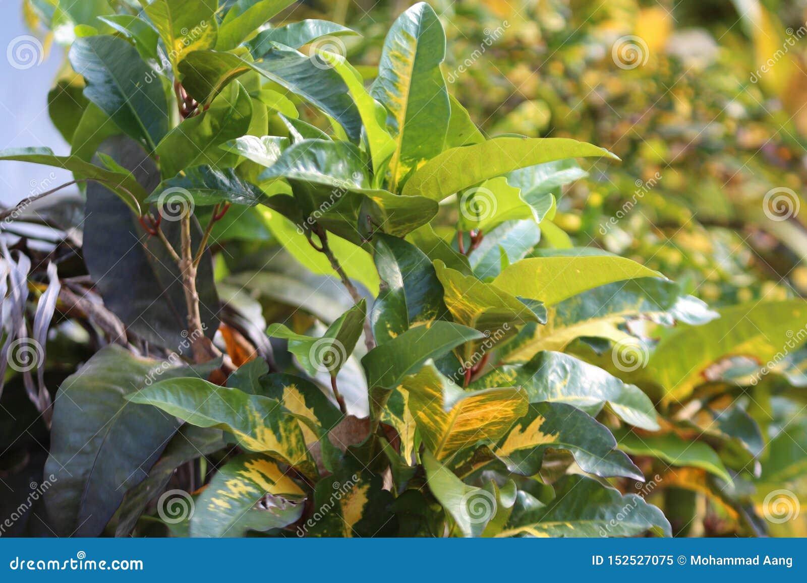 Grünpflanzen ausgesetzt Sonnenlicht