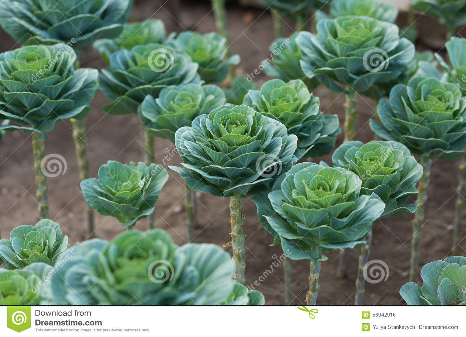 gr npflanzen im garten stockfoto bild von kohl auszug