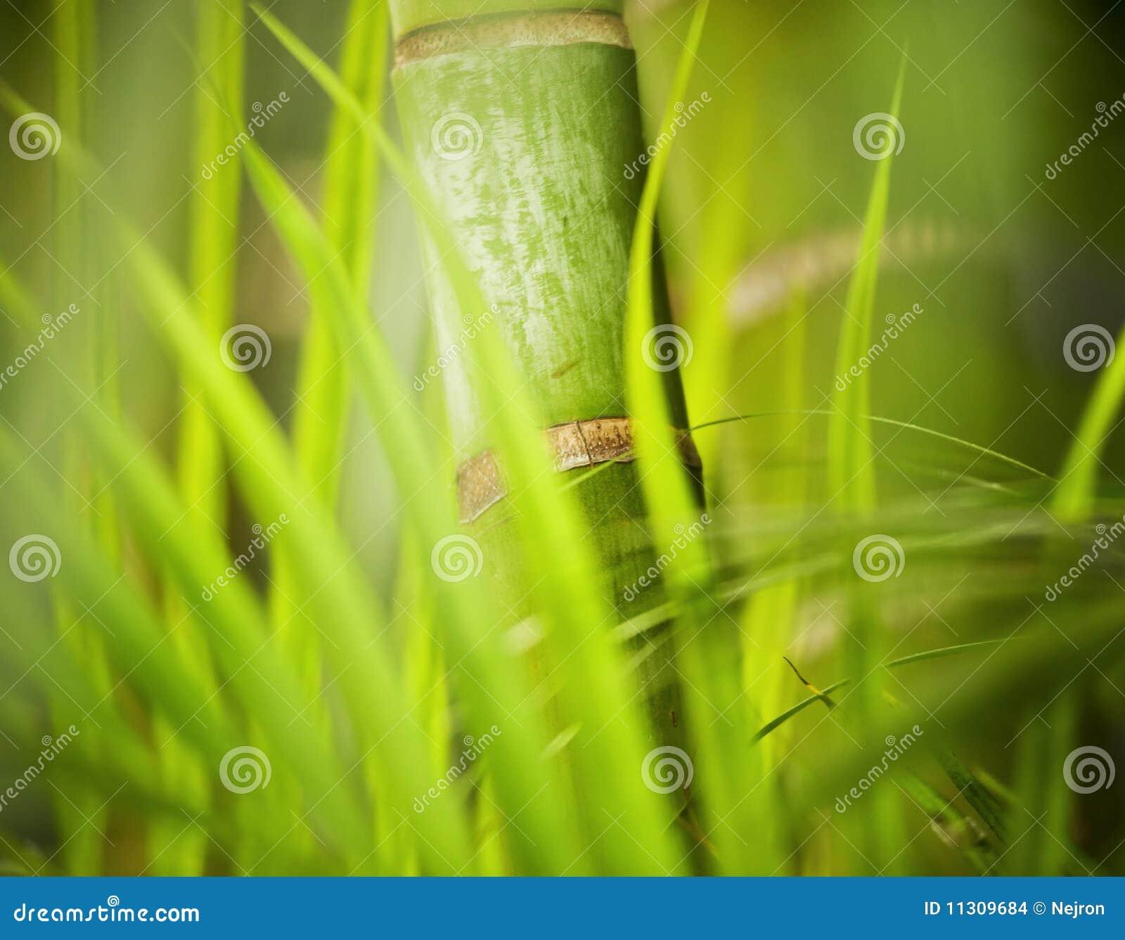 Grünpflanzenahaufnahme