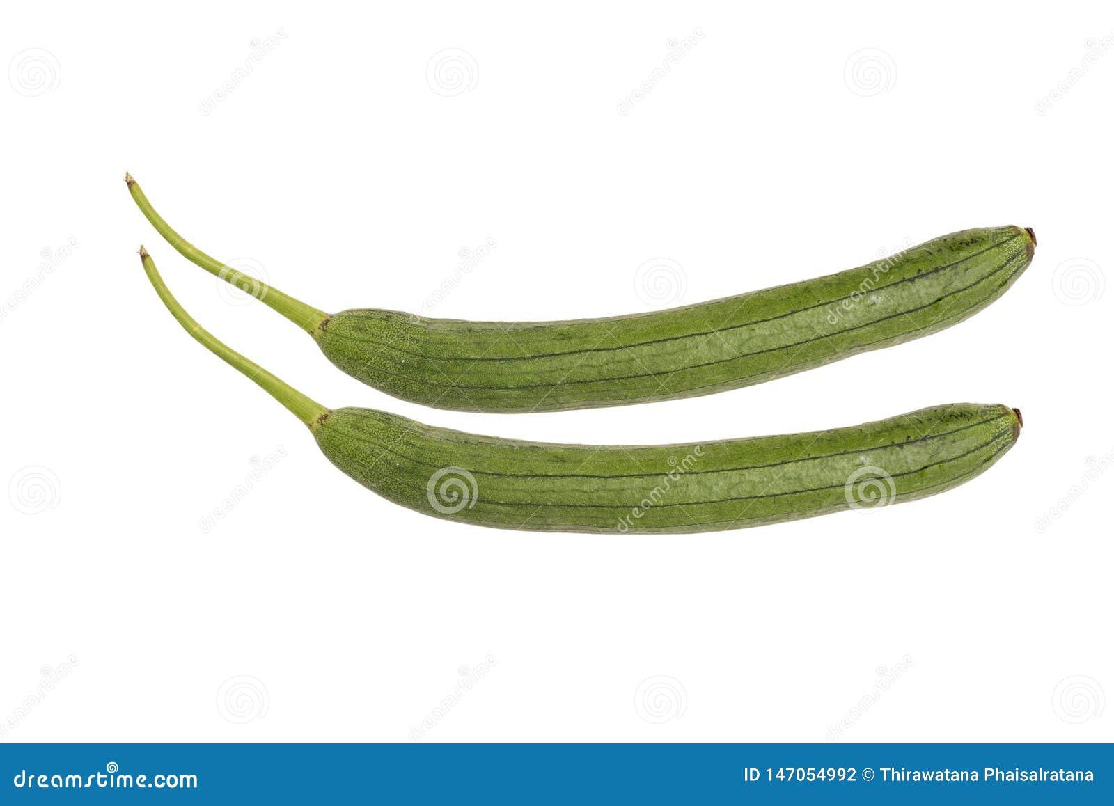 Gr?n zucchini som isoleras p? vit bakgrund Japansk zucchini Variation av märg eller sommarsquash, valde, när den är liten Långt o