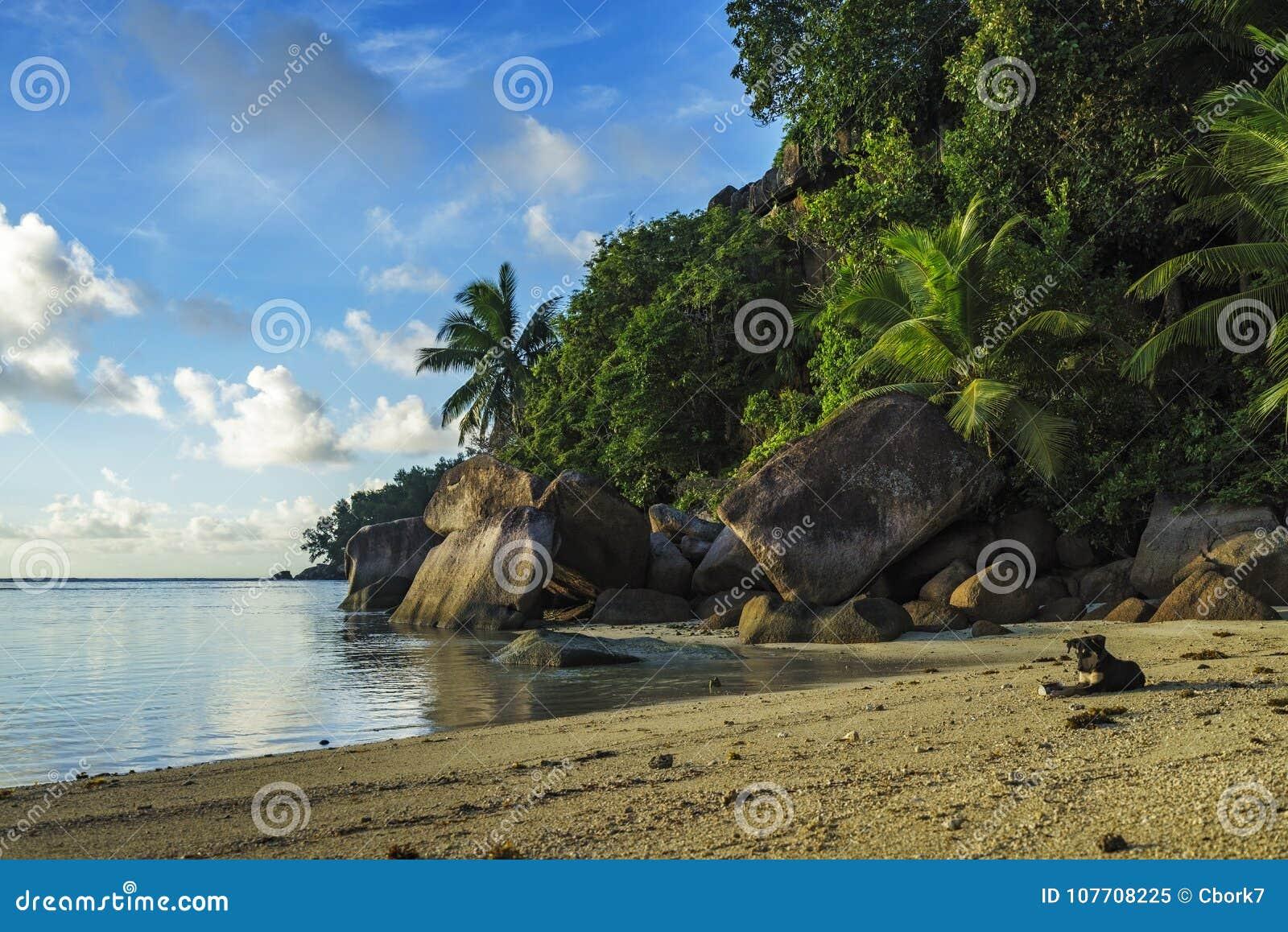 Graaf bij een mooi paradijsstrand op Seychellen 1
