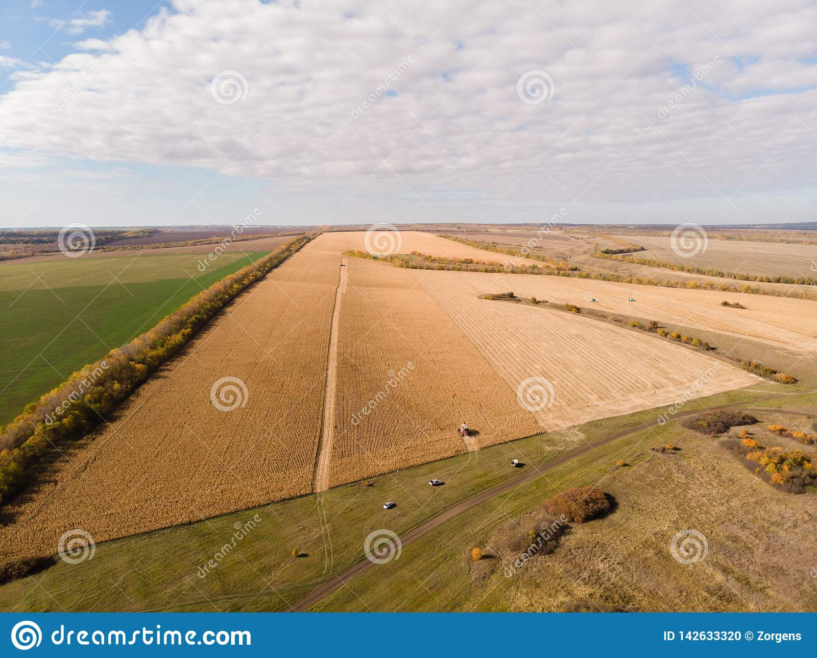 Graangebied het oogsten de herfst die van lucht schieten