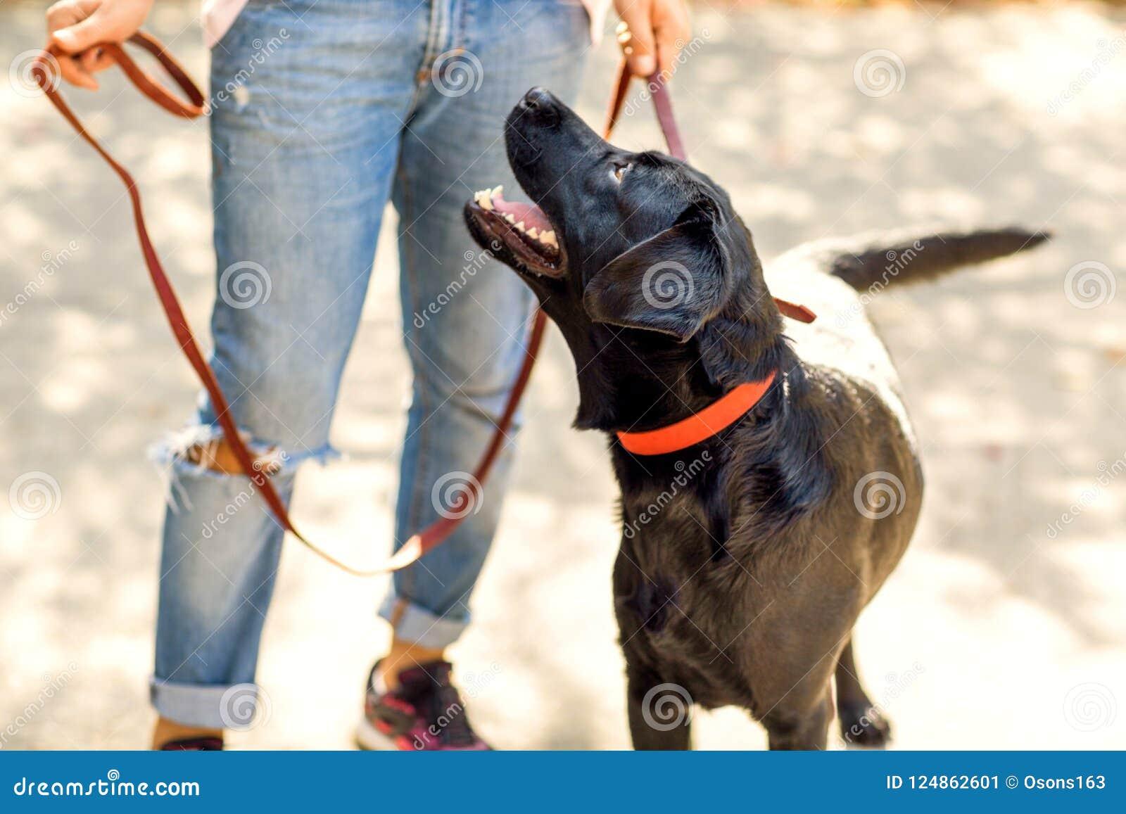Grabb som kramar med hans hund labrador som spelar i parkera