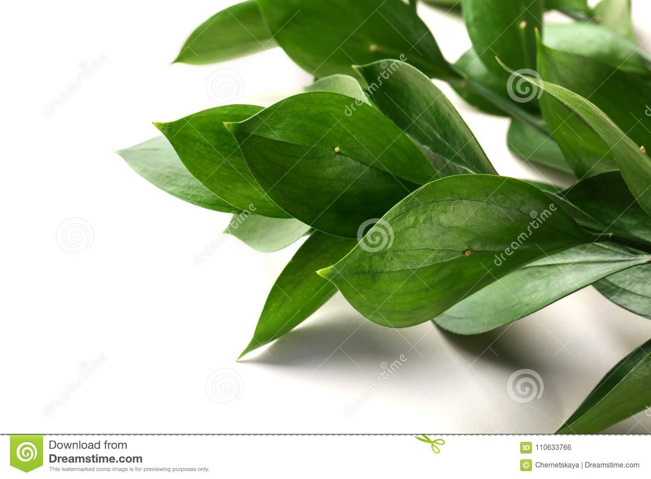 Download Graceful Israeli Ruscus Stock Photo Image Of Plant