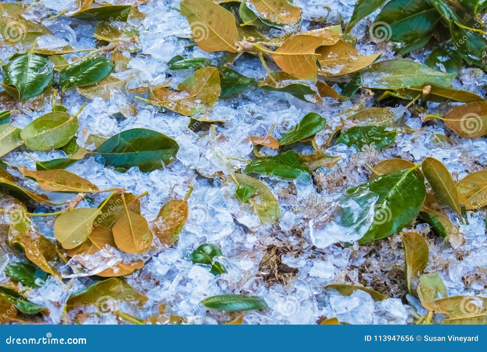 Grad na ziemi przeplecionej z zielonymi Magnoliowymi liśćmi ja pukał daleko drzewa