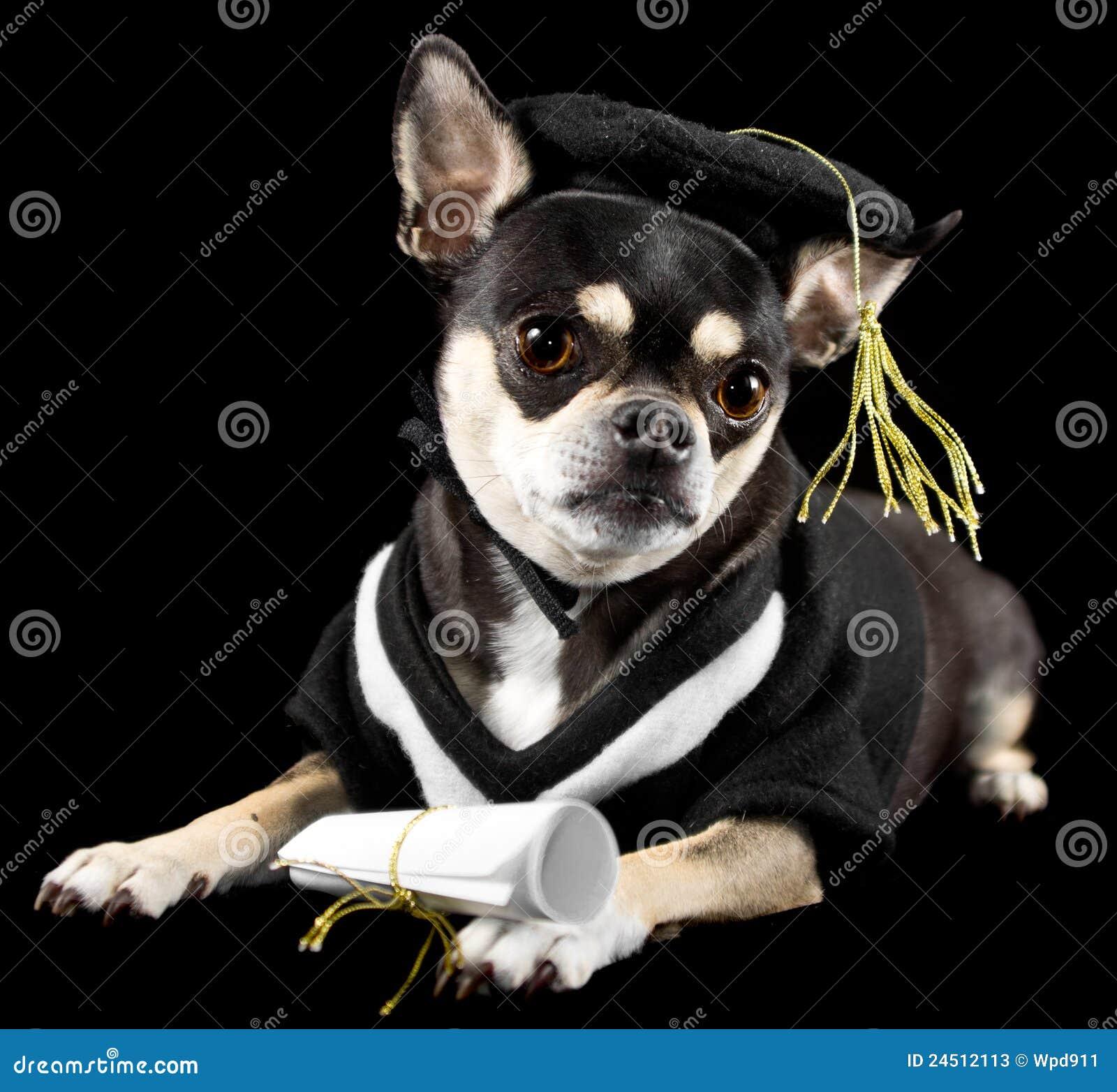 Cute Puppy Graduation Stock Photos - 64 Images