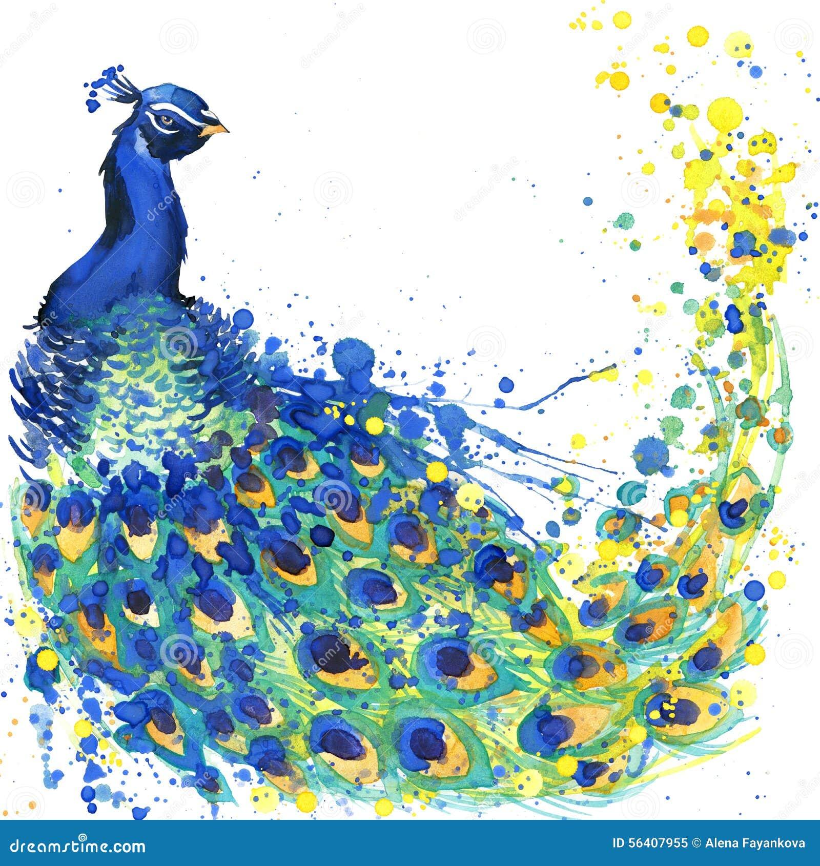 Grafici esotici della maglietta del pavone illustrazione del pavone con il fondo strutturato dell acquerello della spruzzata acqu