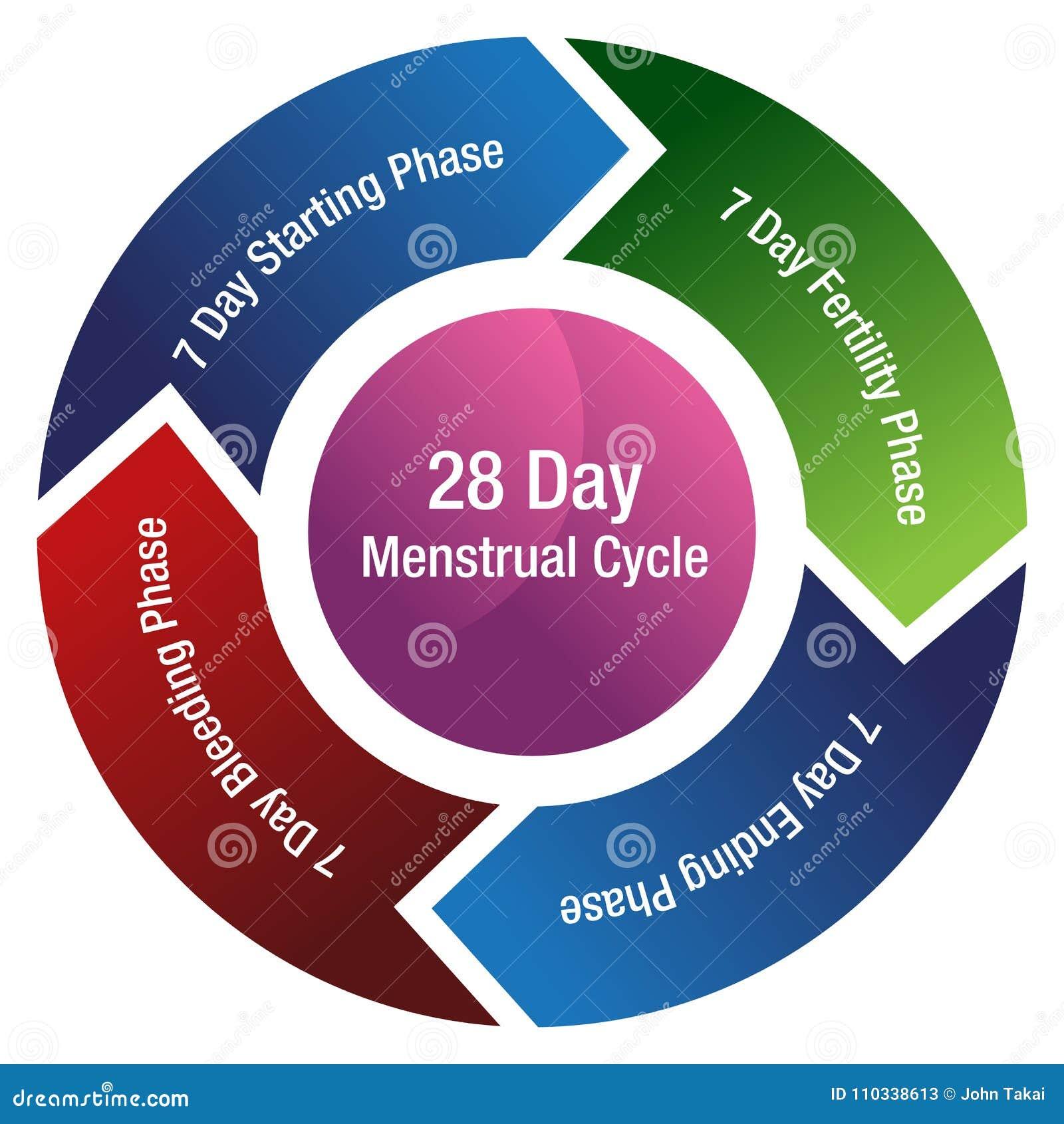Calendario Del Ciclo Mestruale.Grafico Della Freccia Di Fertilita Del Ciclo Mestruale