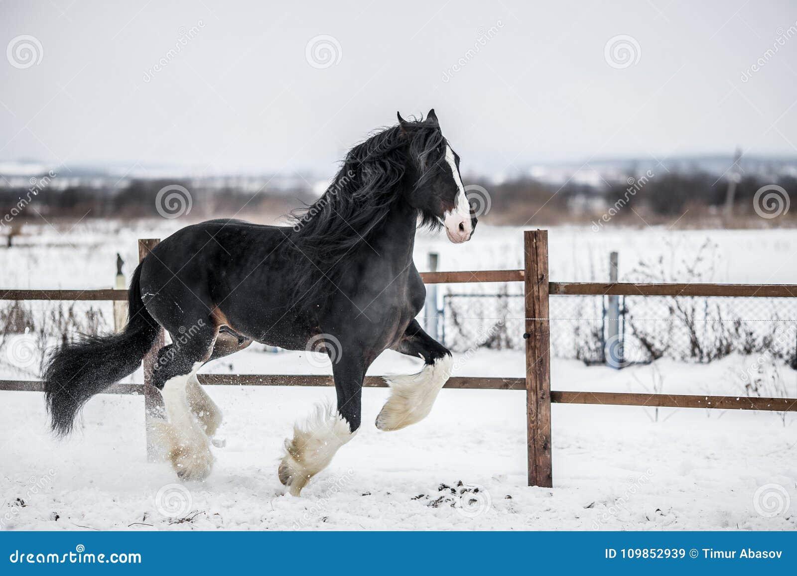 Grafschafts-Pferd