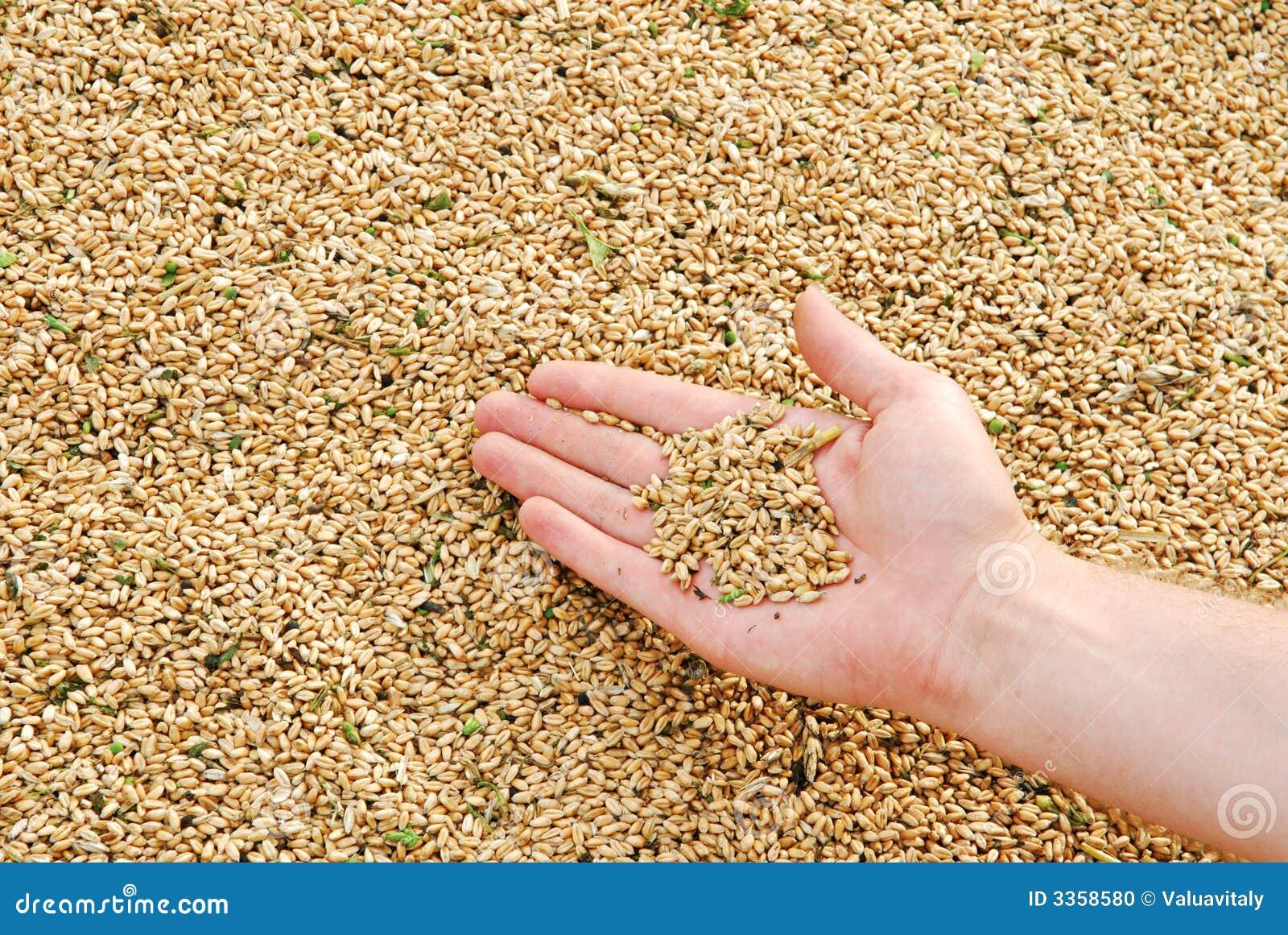 Grain times
