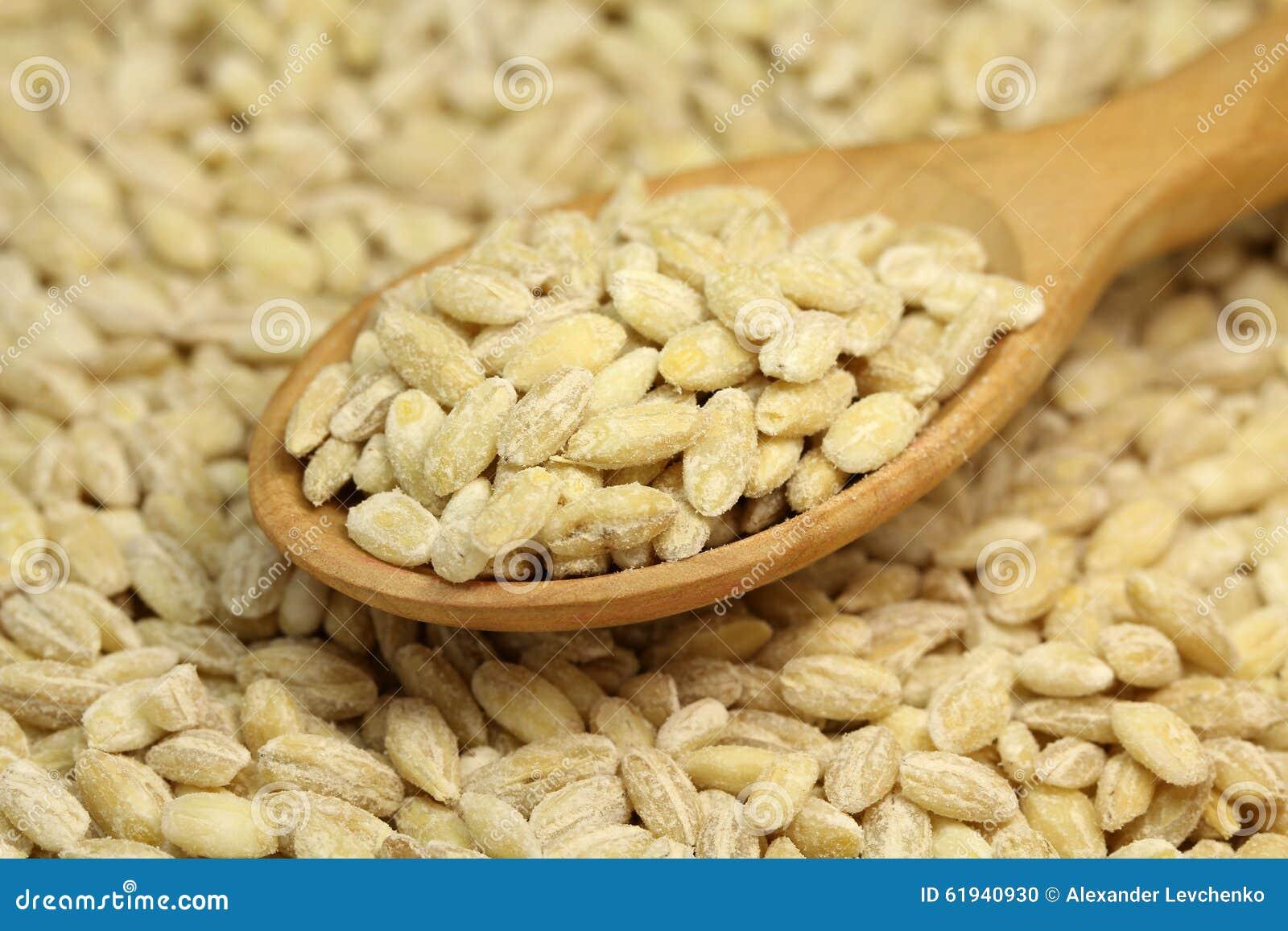 Grain barley in wooden spoon