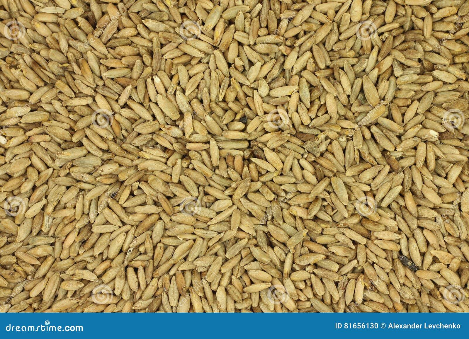 Grain rye malt background