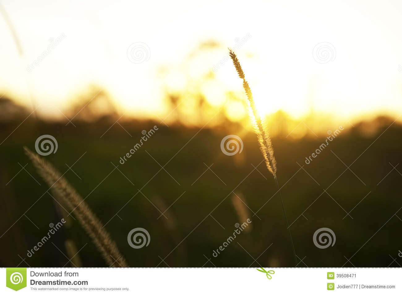 Grain at sunrise with sunbeams