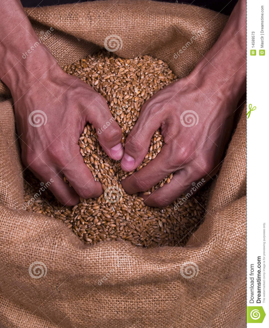 Strong coarse shape Man hands taking grain of wheat from the bagging.
