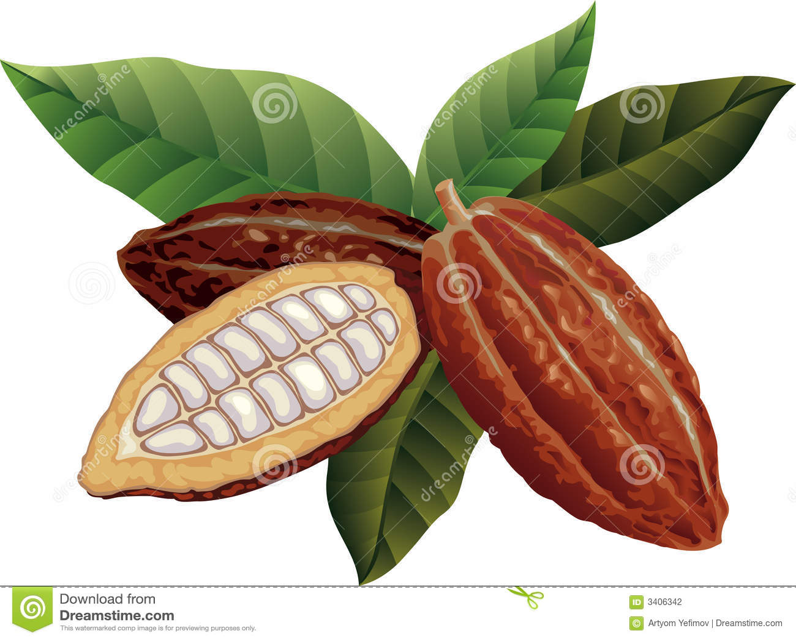 Graines de cacao