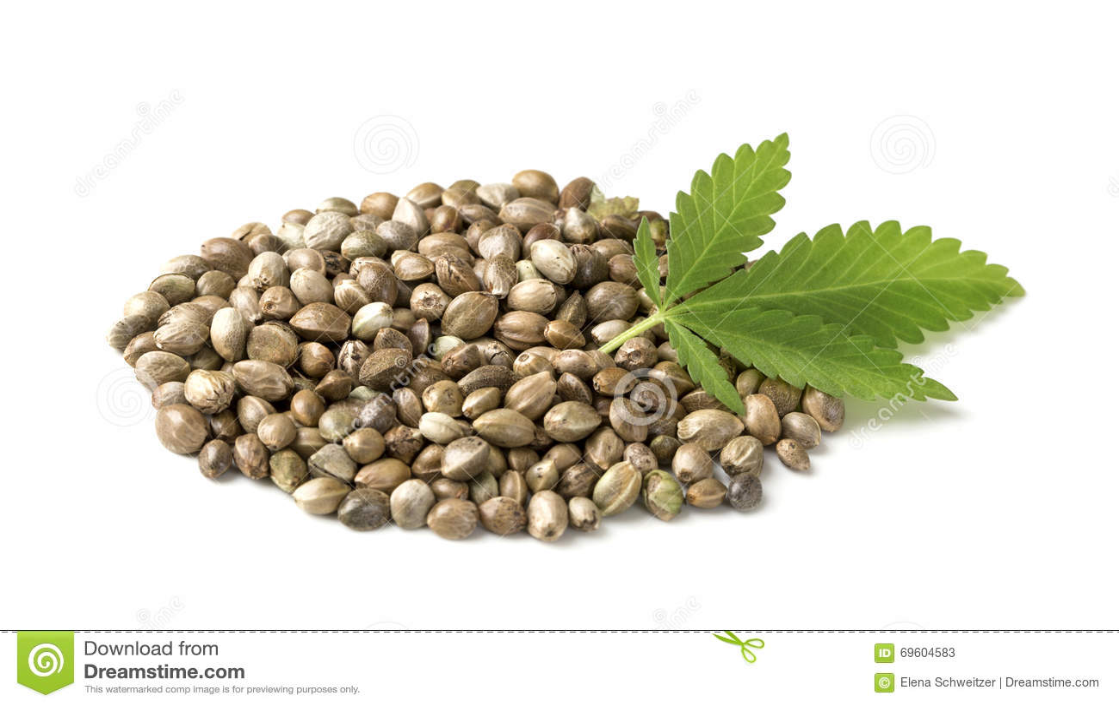 graines de chanvre avec une feuille verte photo stock image 69604583. Black Bedroom Furniture Sets. Home Design Ideas