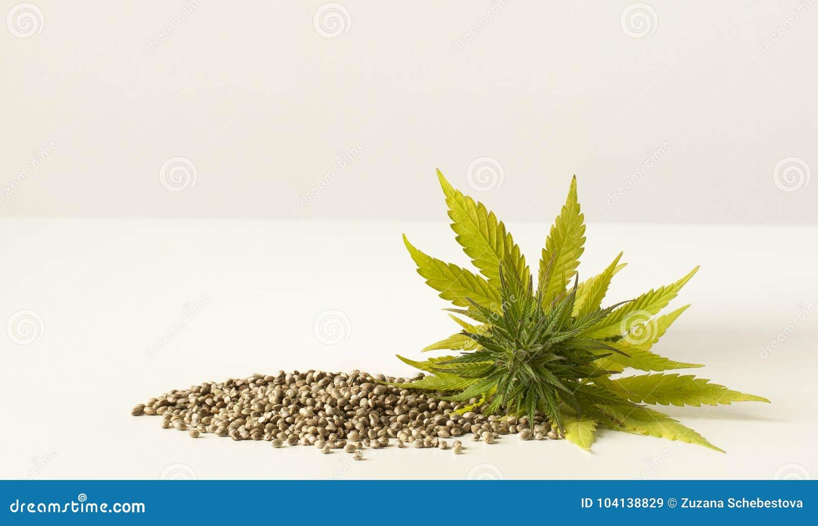 Graines De Chanvre Crues De Fleur Verte De Cannabis Image Stock