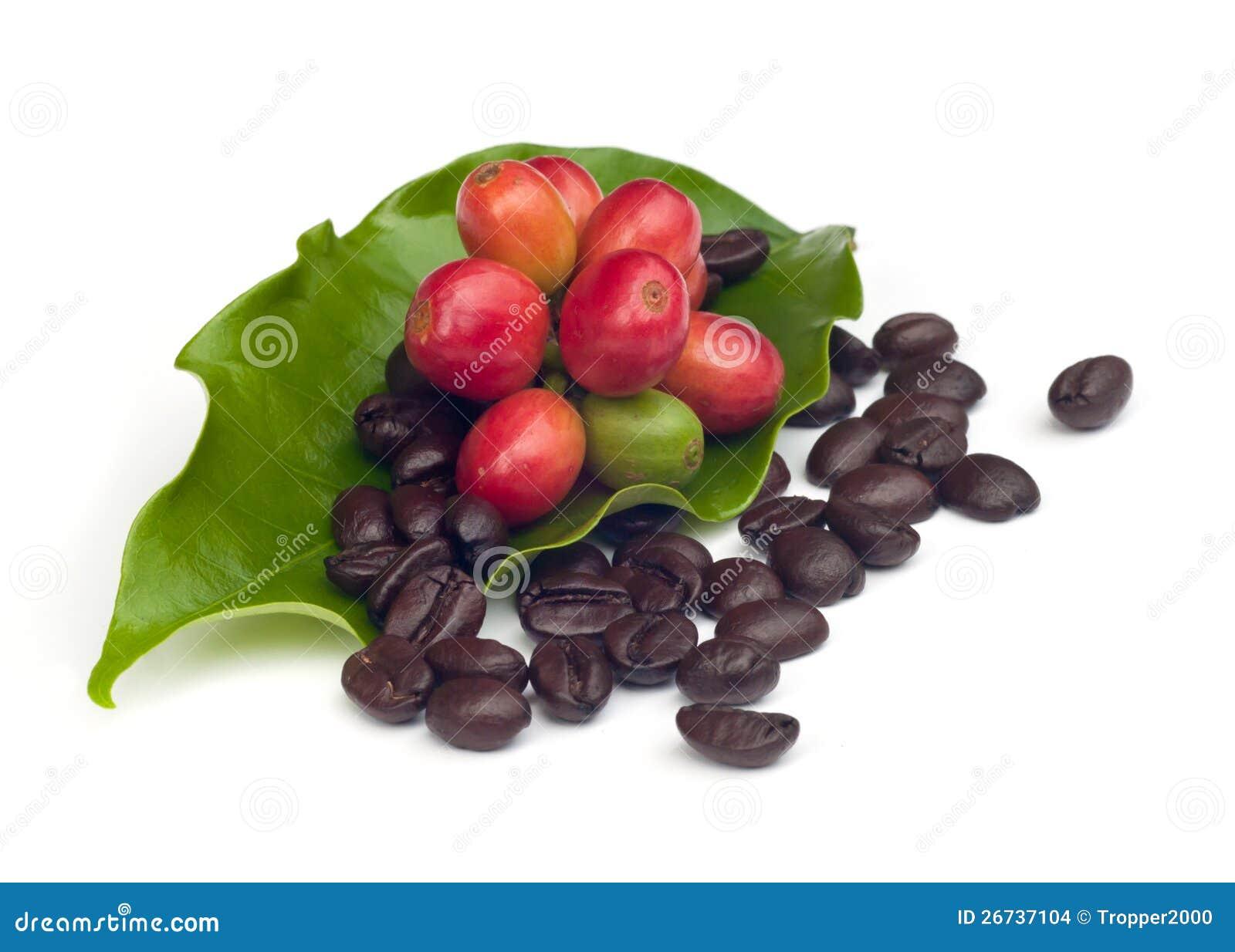 Grains de café avec la lame.
