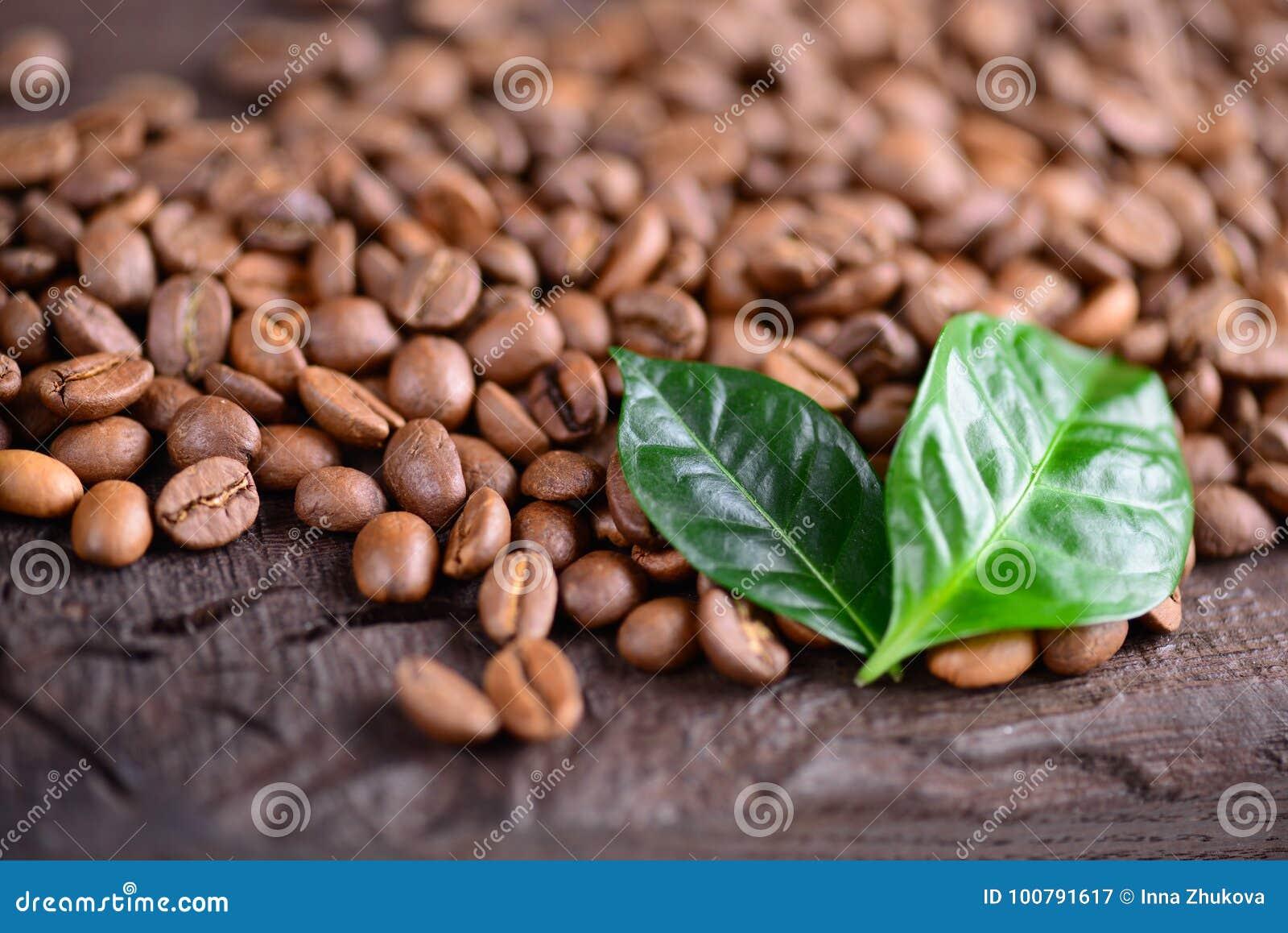 Grains de café et feuilles vertes d usine de café sur un vieux
