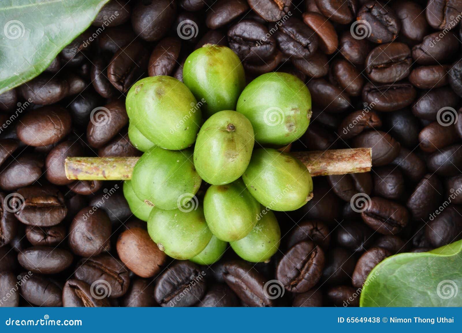 Grains de café mûrissant sur des grains de café