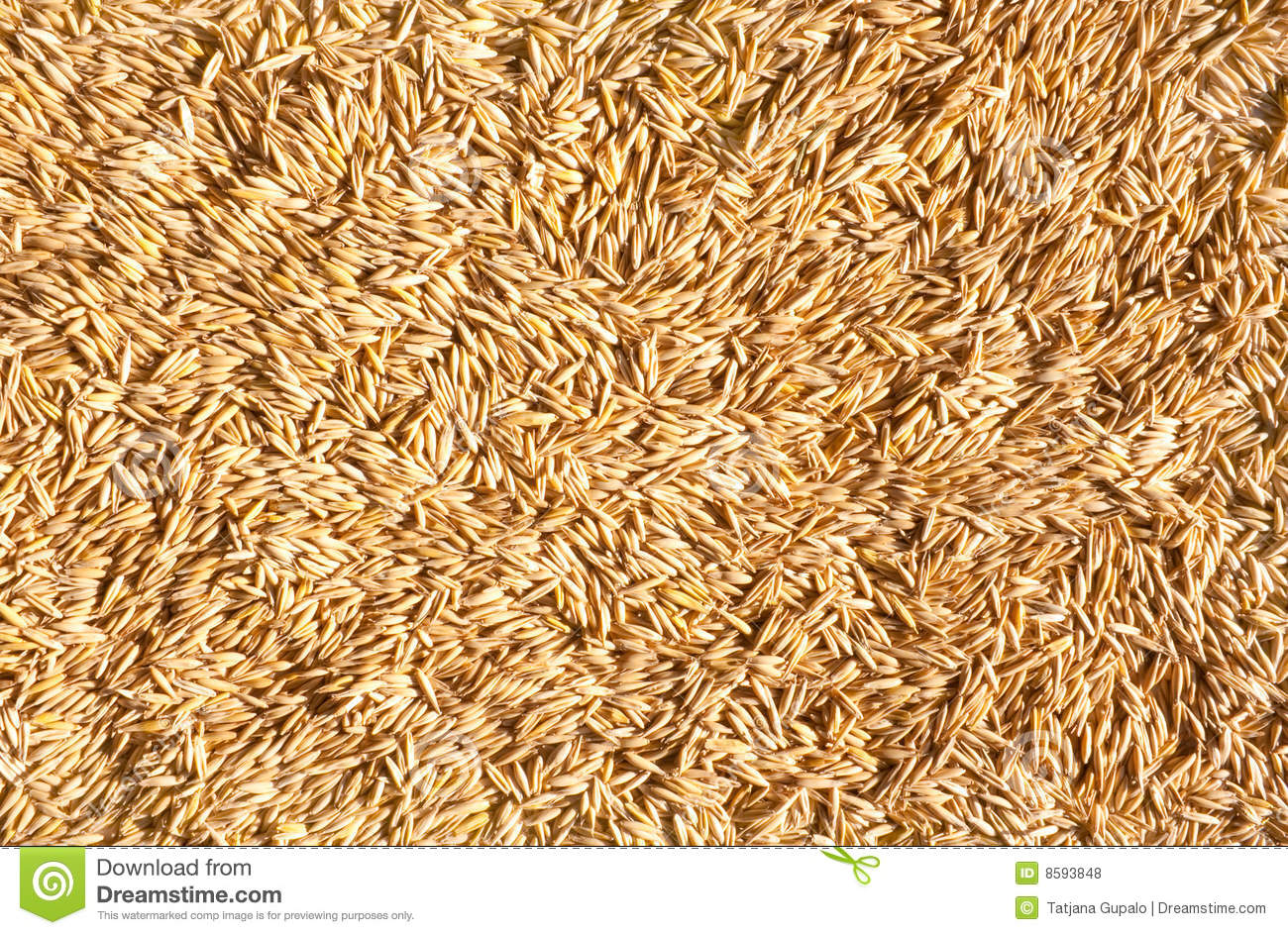 grains of oat stock photo image of core background kernel 8593848. Black Bedroom Furniture Sets. Home Design Ideas
