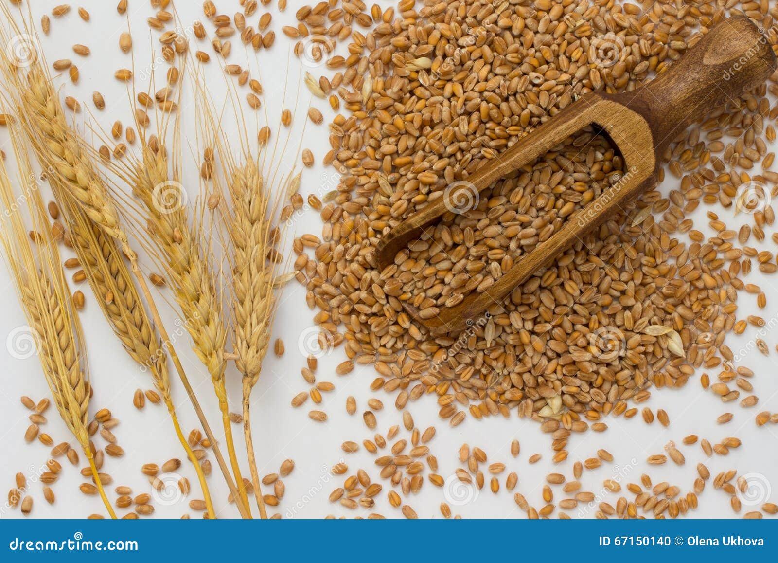 Grains of wheat, wooden spoon, barley