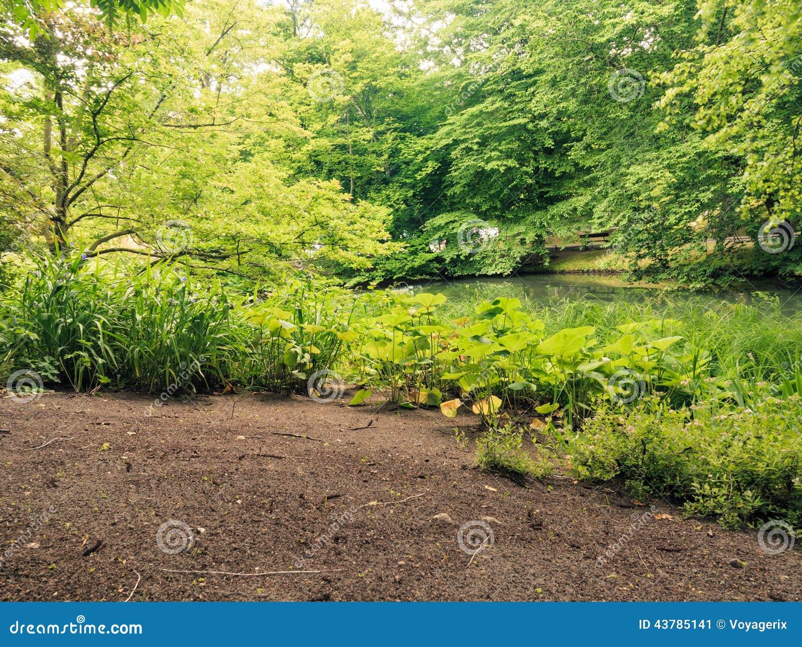 flores jardim exterior : flores jardim exterior:Natural Grasses Plant Landscape
