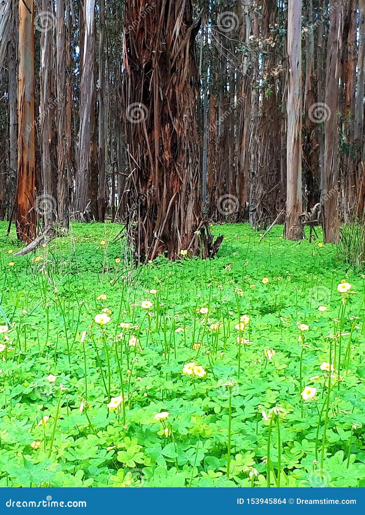 Grama de verde floresta