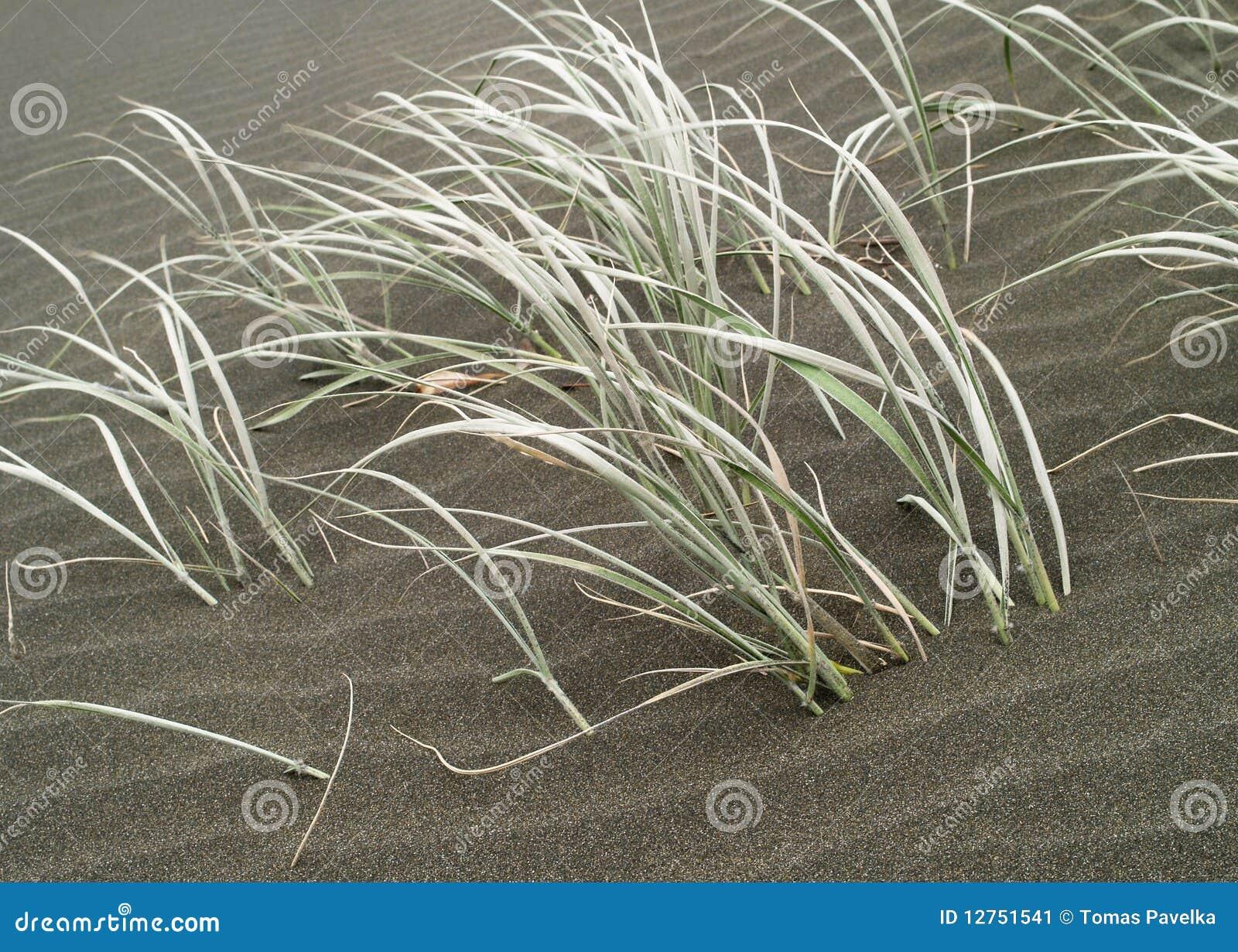 Grama e areia
