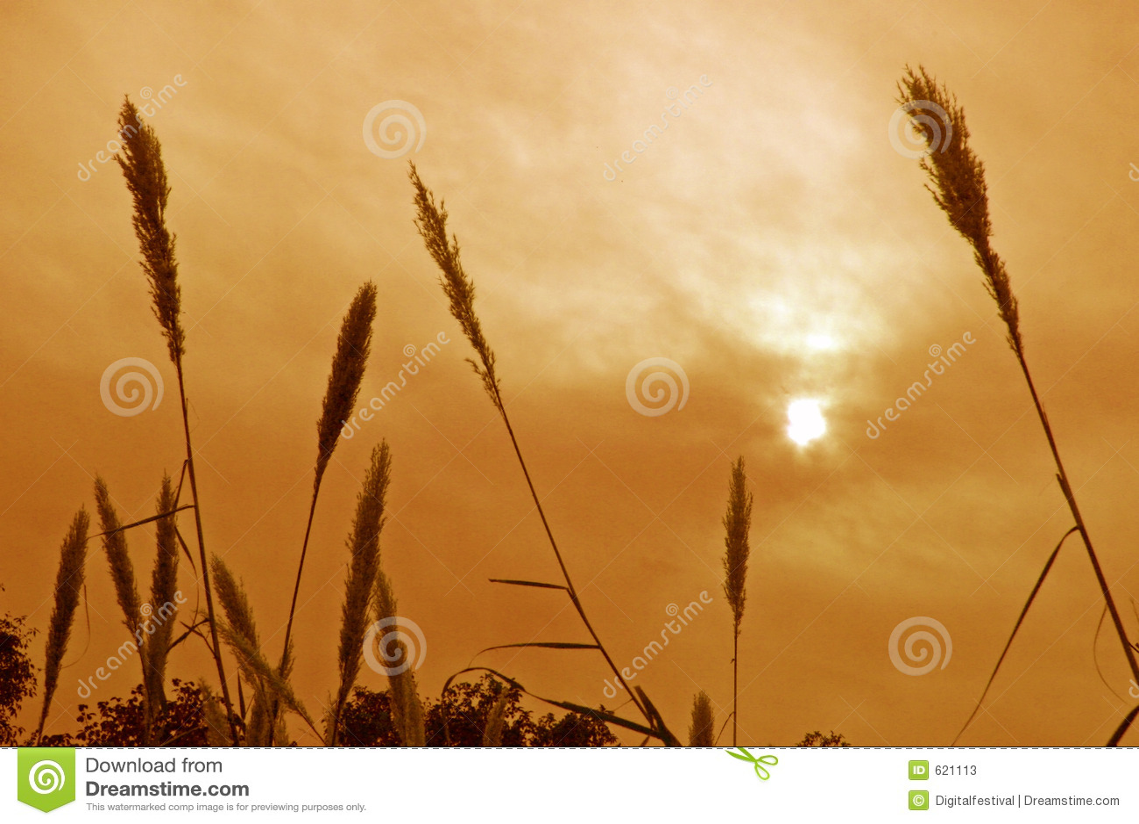 Grama e plantas mostradas em silhueta de encontro ao sol