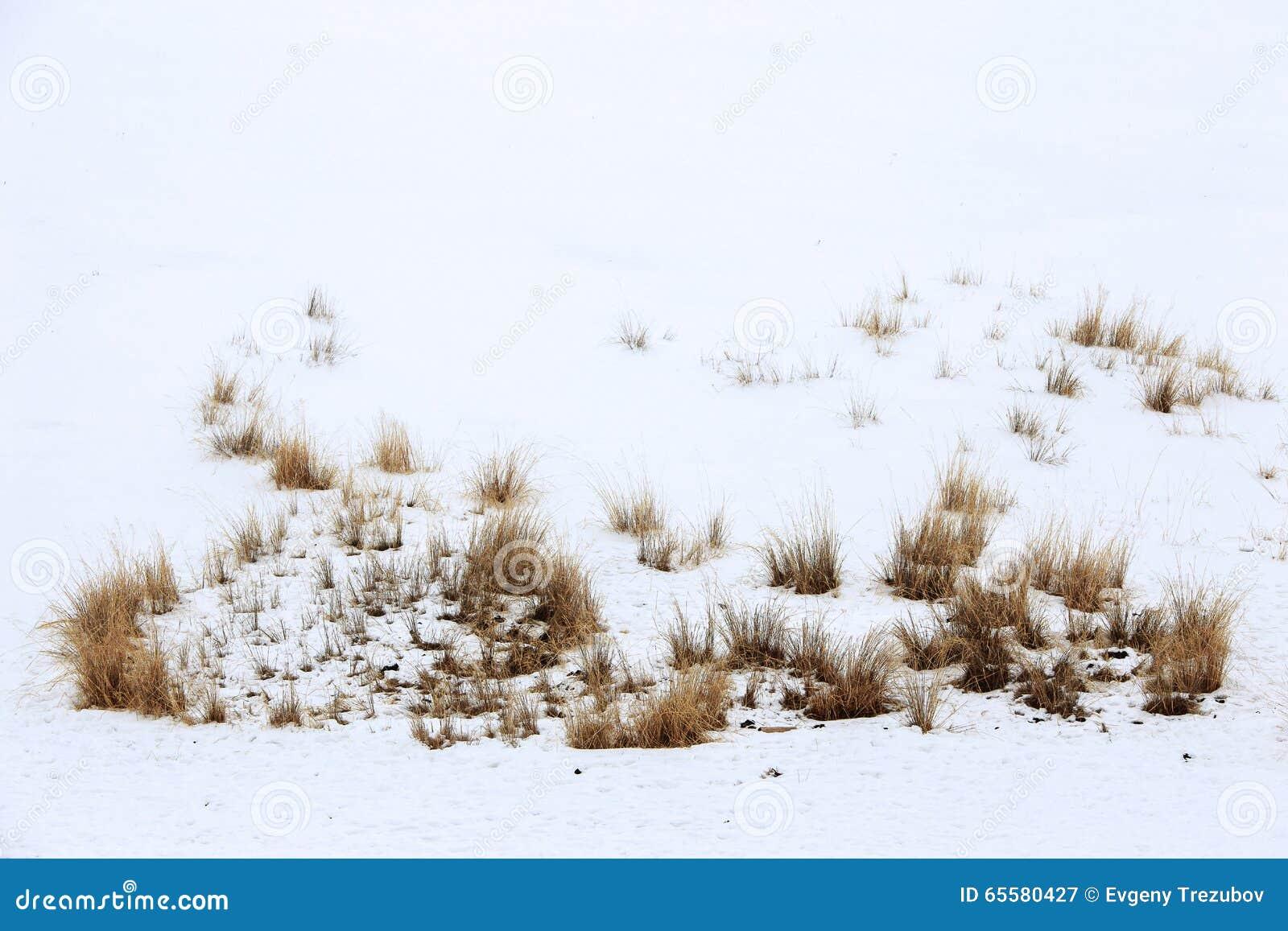 Grama na neve em dezembro